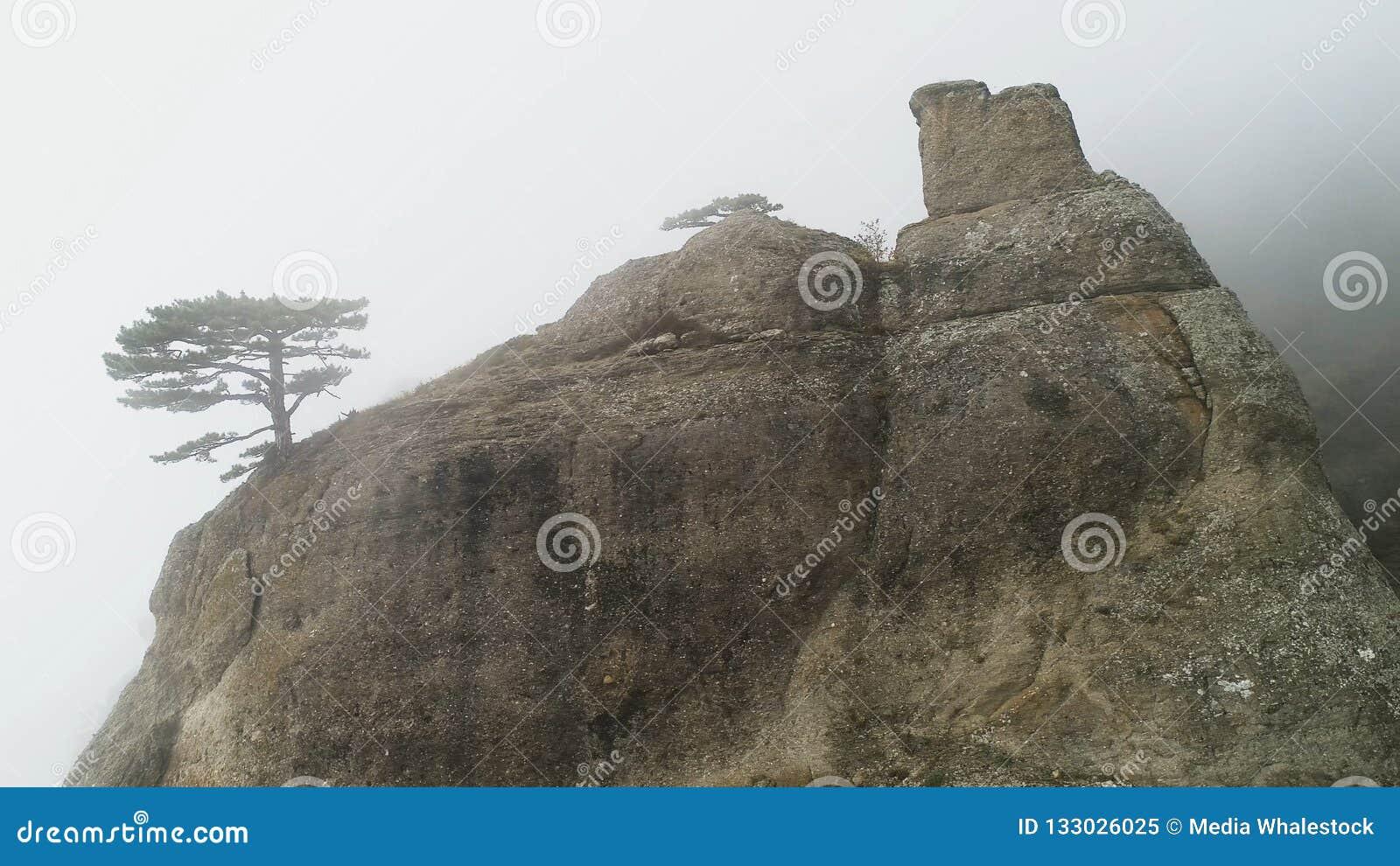 Πράσινο δέντρο στην άκρη του απότομου βράχου στην ομίχλη πλάνο Πέτρινος στυλοβάτης στο βράχο που βυθίζεται στην πυκνή ομίχλη Μυστ