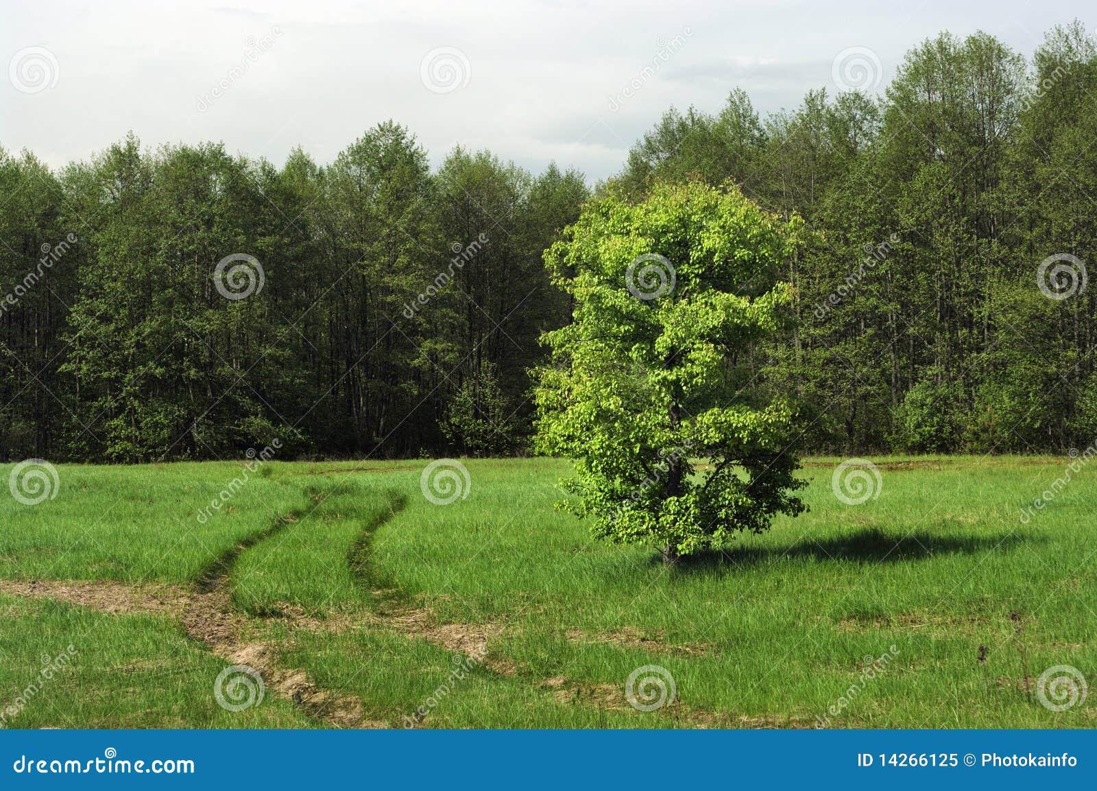 πράσινο λιβάδι χλόης