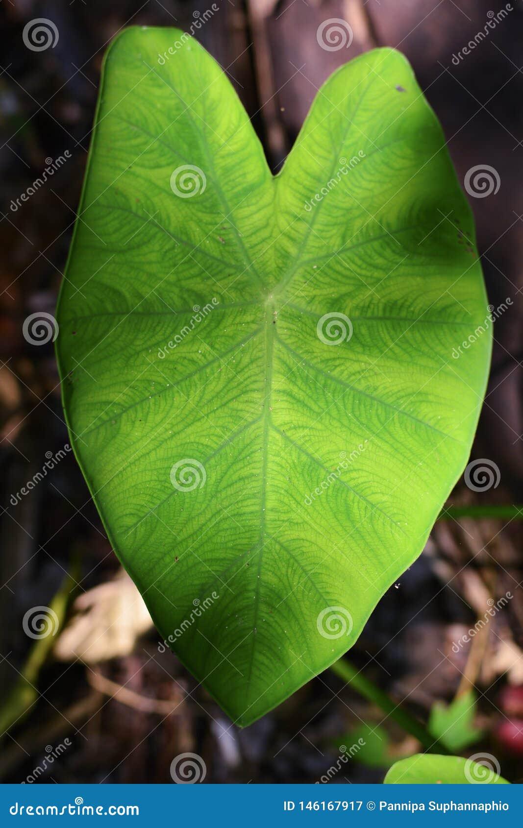 Πράσινο μπονσάι στην ξηρά φύση