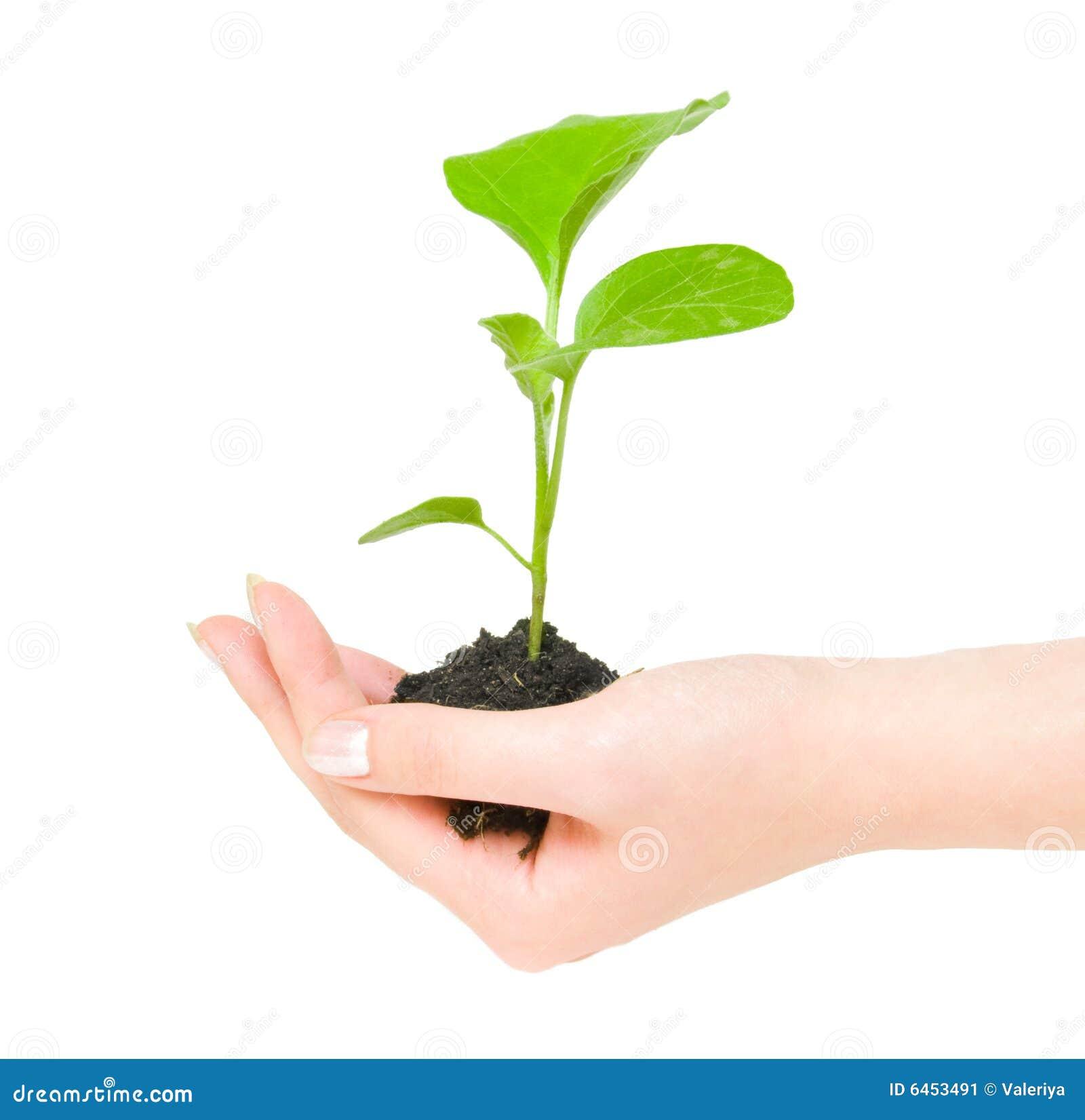 πράσινο να αναπτύξει φυτό χ&epsilo