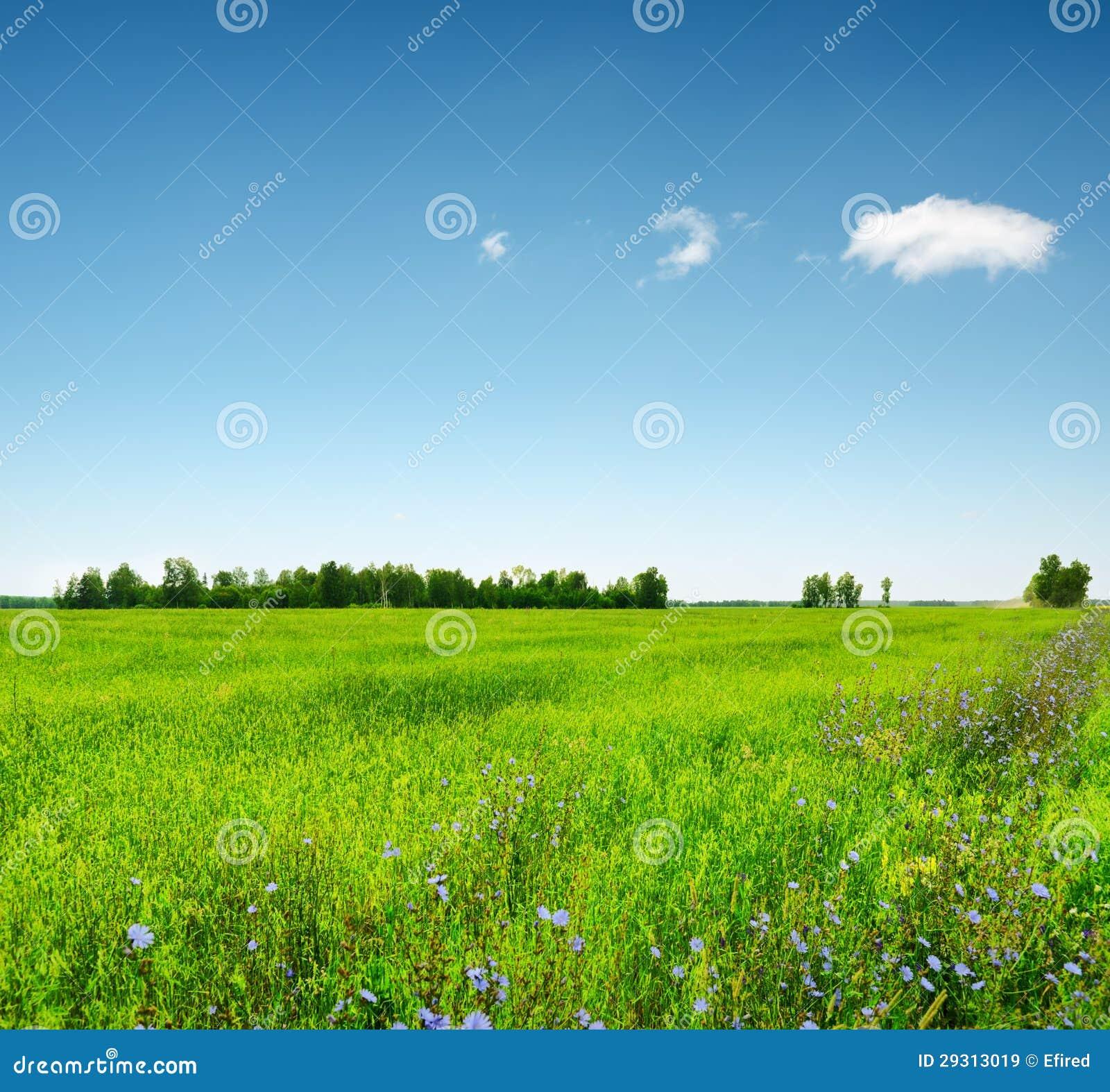 Πράσινο πεδίο κάτω από το μπλε ουρανό. Θερινό τοπίο