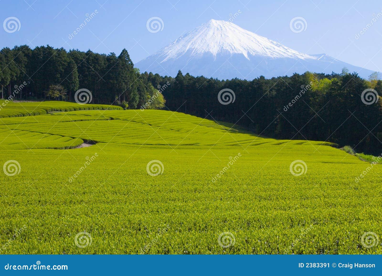 πράσινο τσάι VI πεδίων
