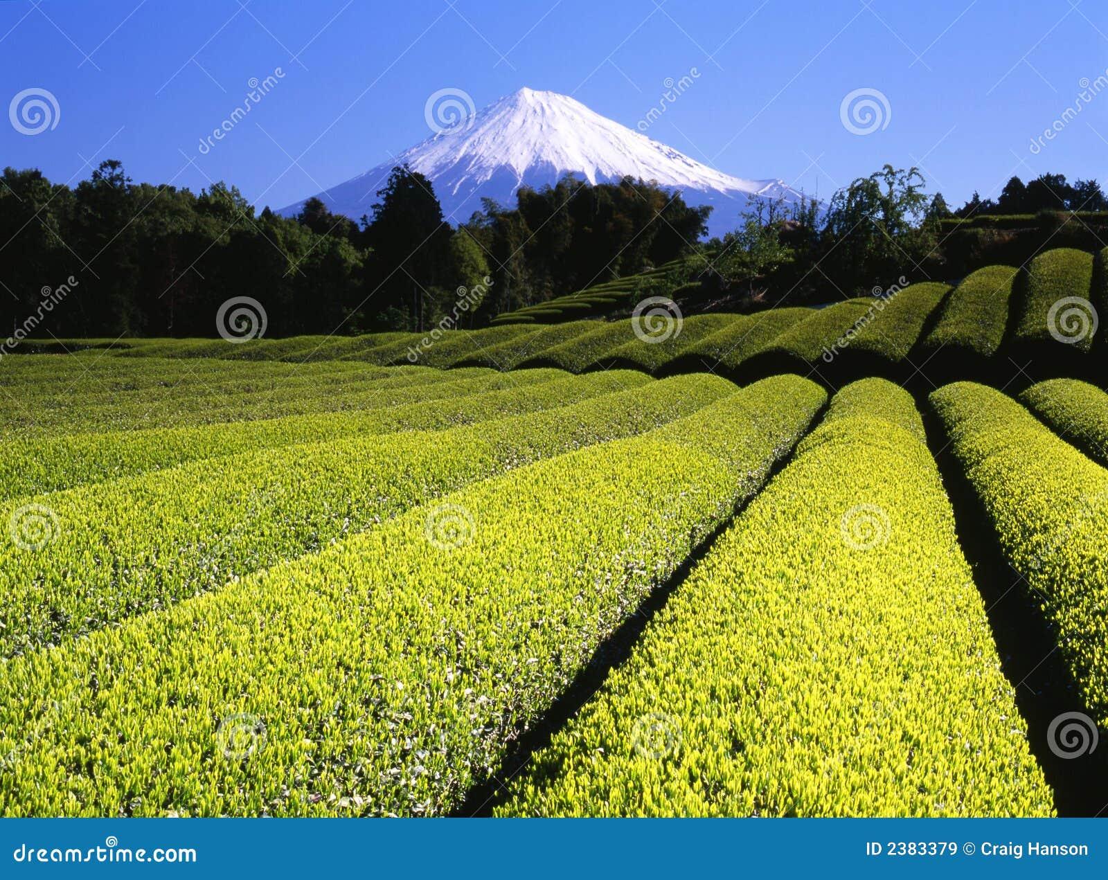 πράσινο τσάι VII πεδίων