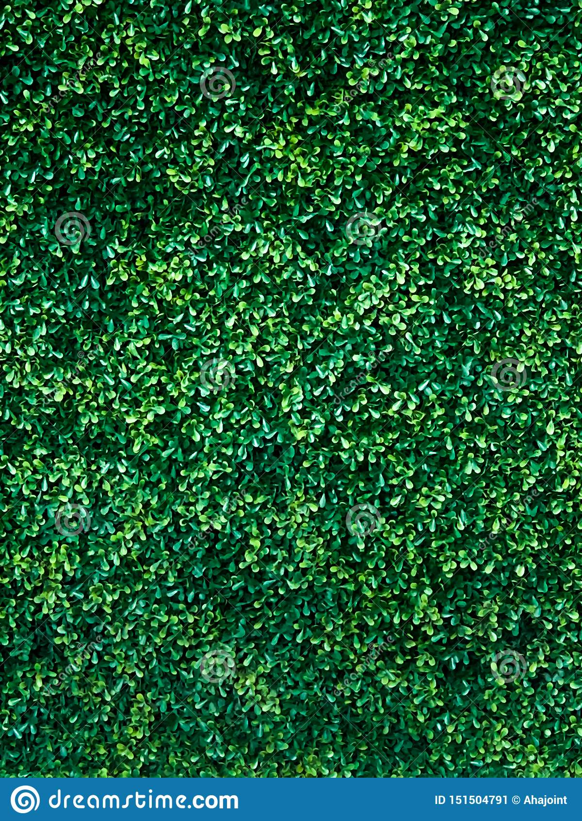 Πράσινο υπόβαθρο τοίχων δέντρων