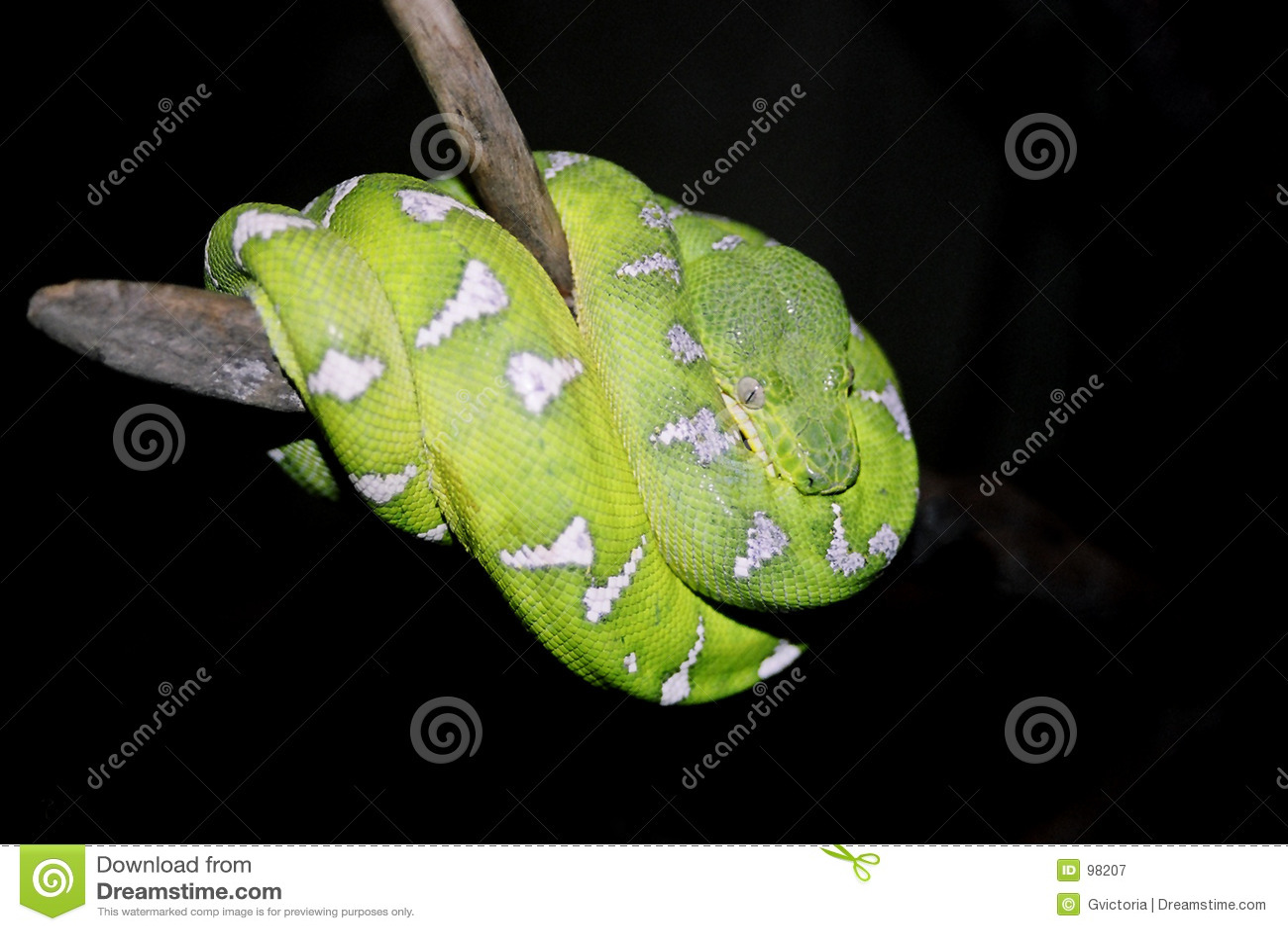 πράσινο φίδι