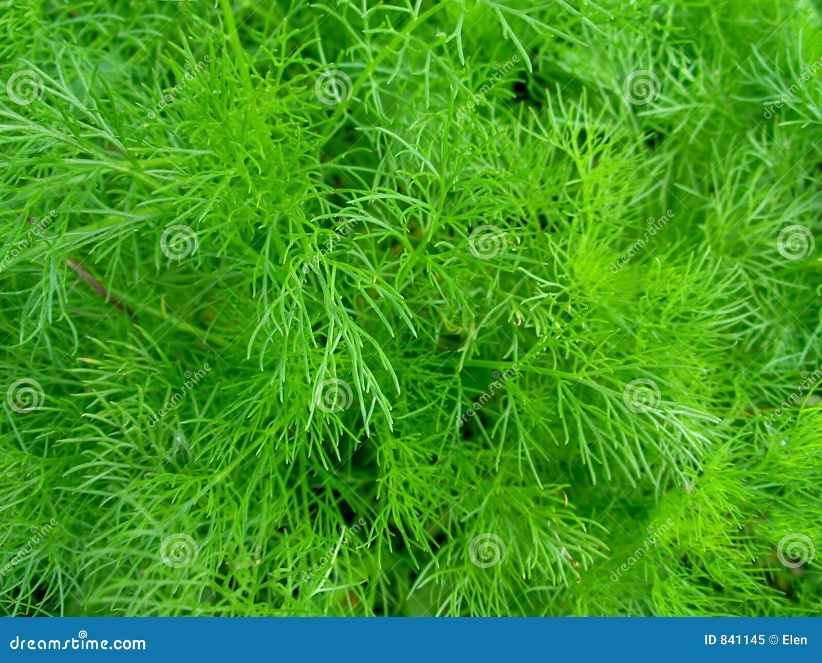 πράσινο φυτό ανασκόπησης