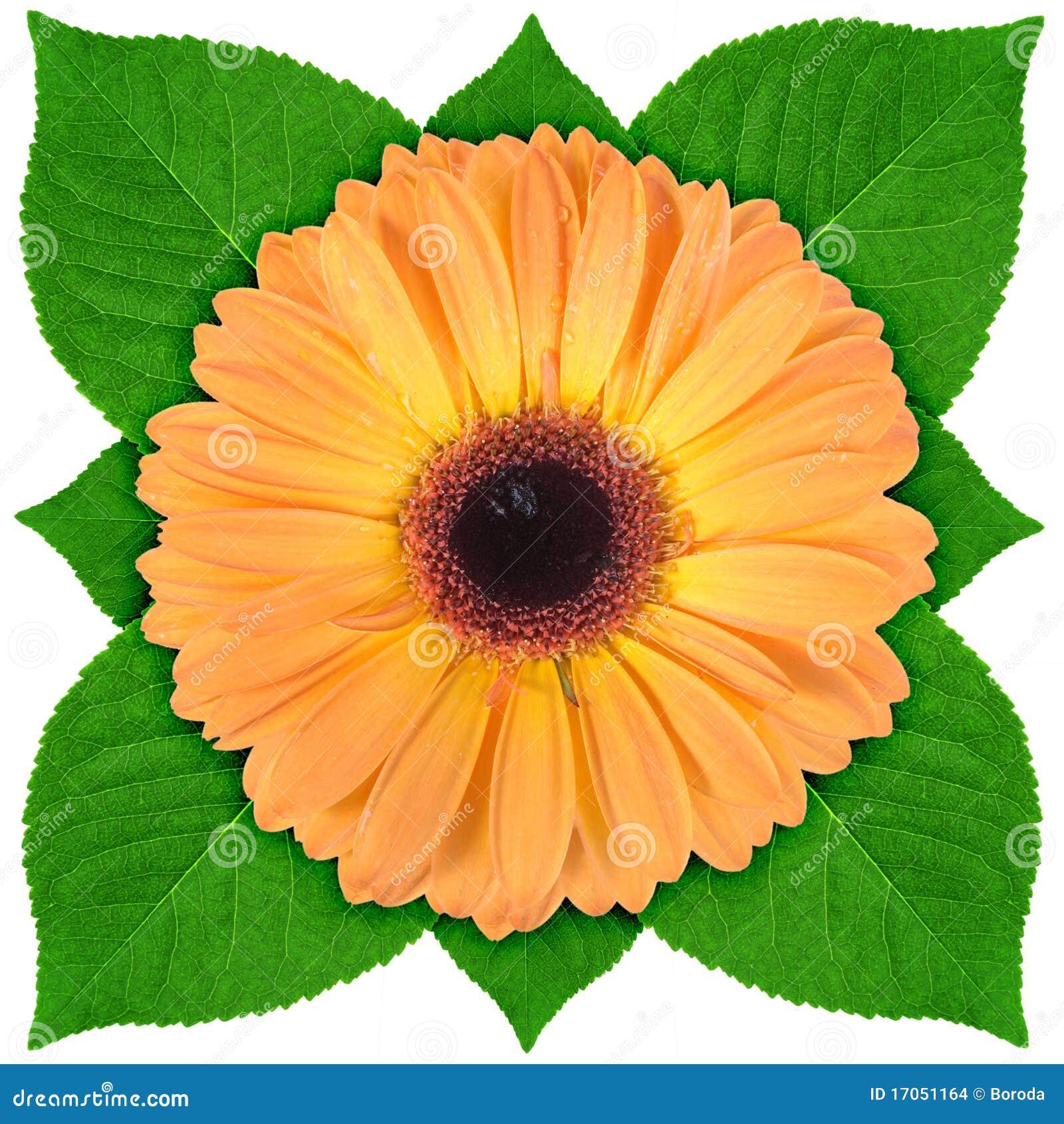 πράσινο φύλλο ένα λουλο&upsi