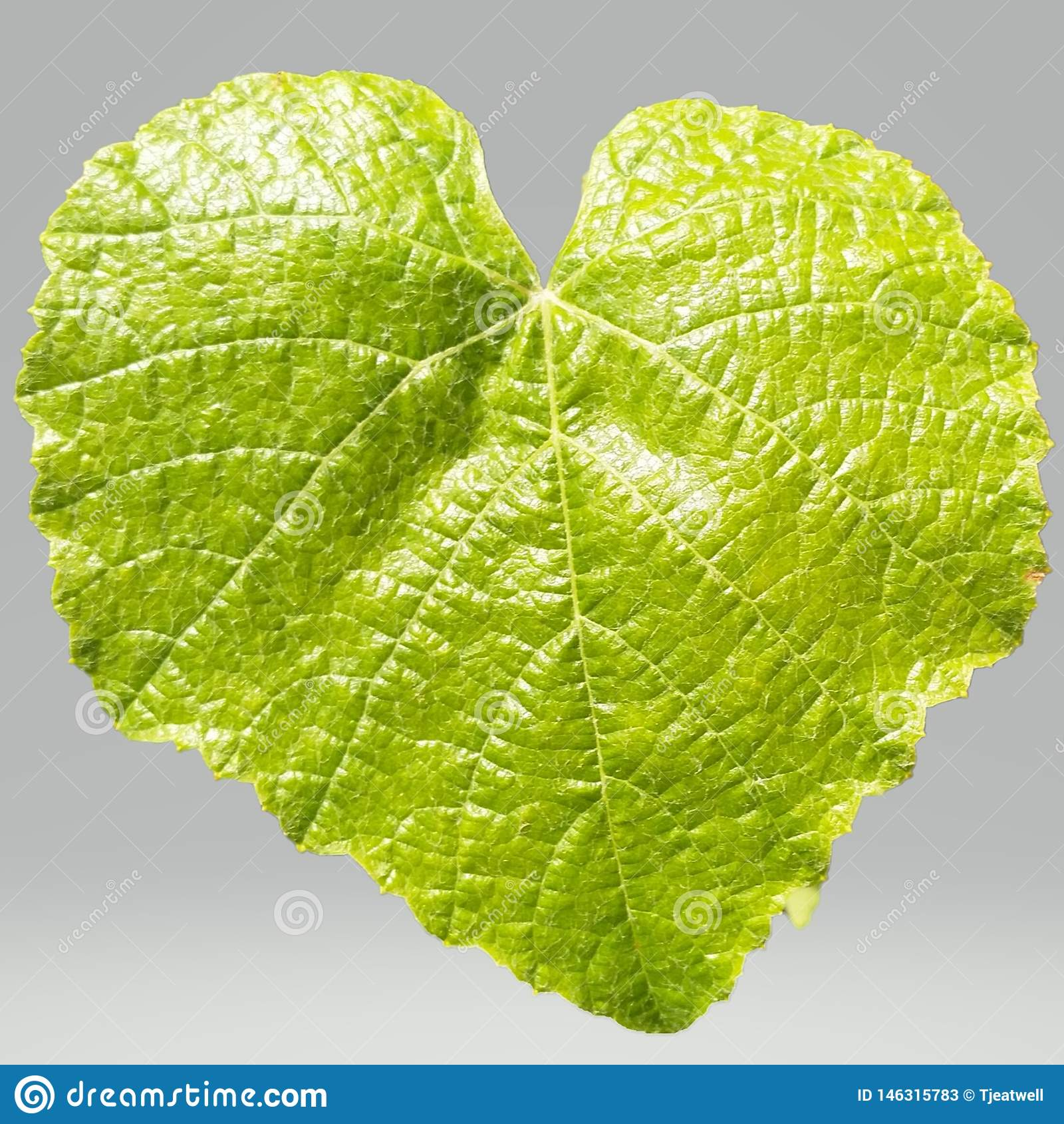 Πράσινο φύλλο σε ένα διαφανές υπόβαθρο