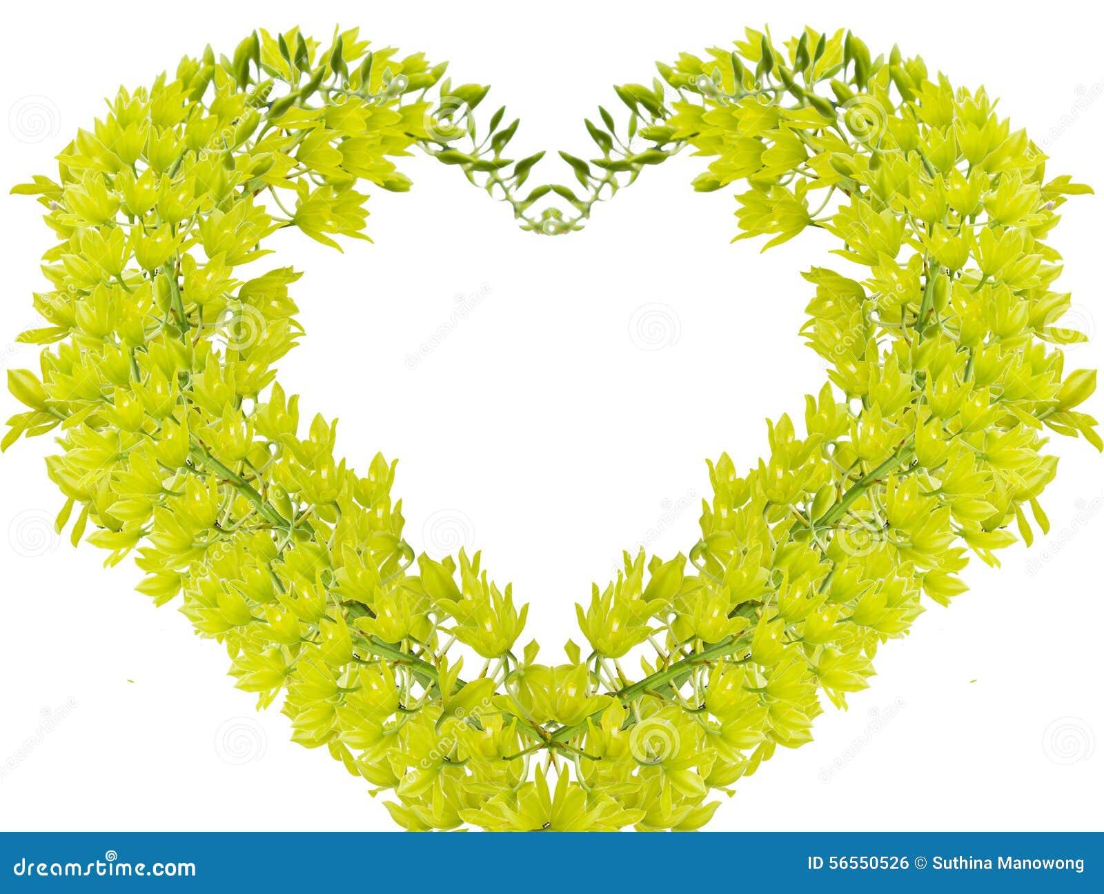 Download πράσινο orchid στοκ εικόνες. εικόνα από ανθοδεσμών, έξυπνο - 56550526