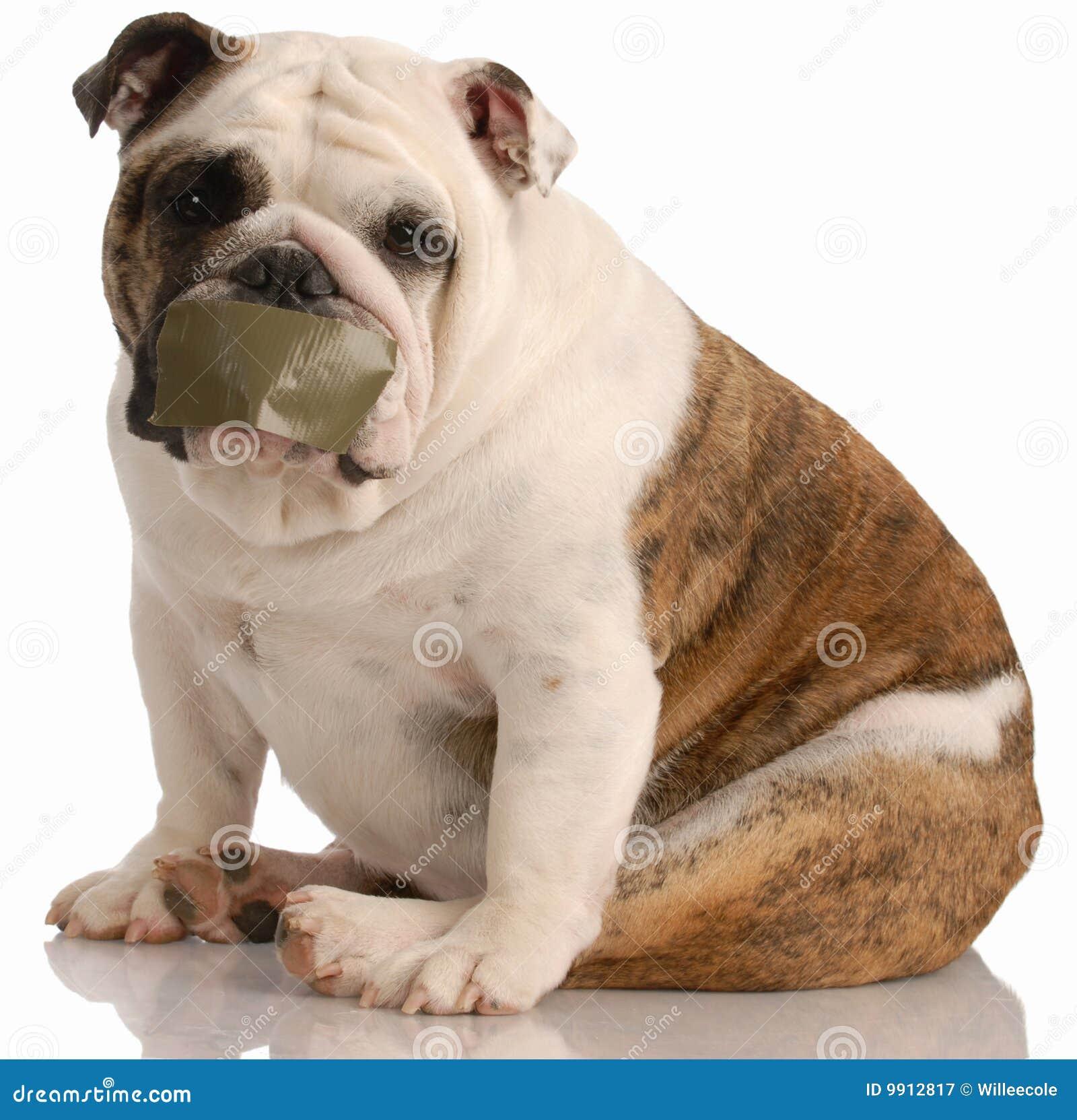 προβλήματα σκυλιών αποφλοίωσης