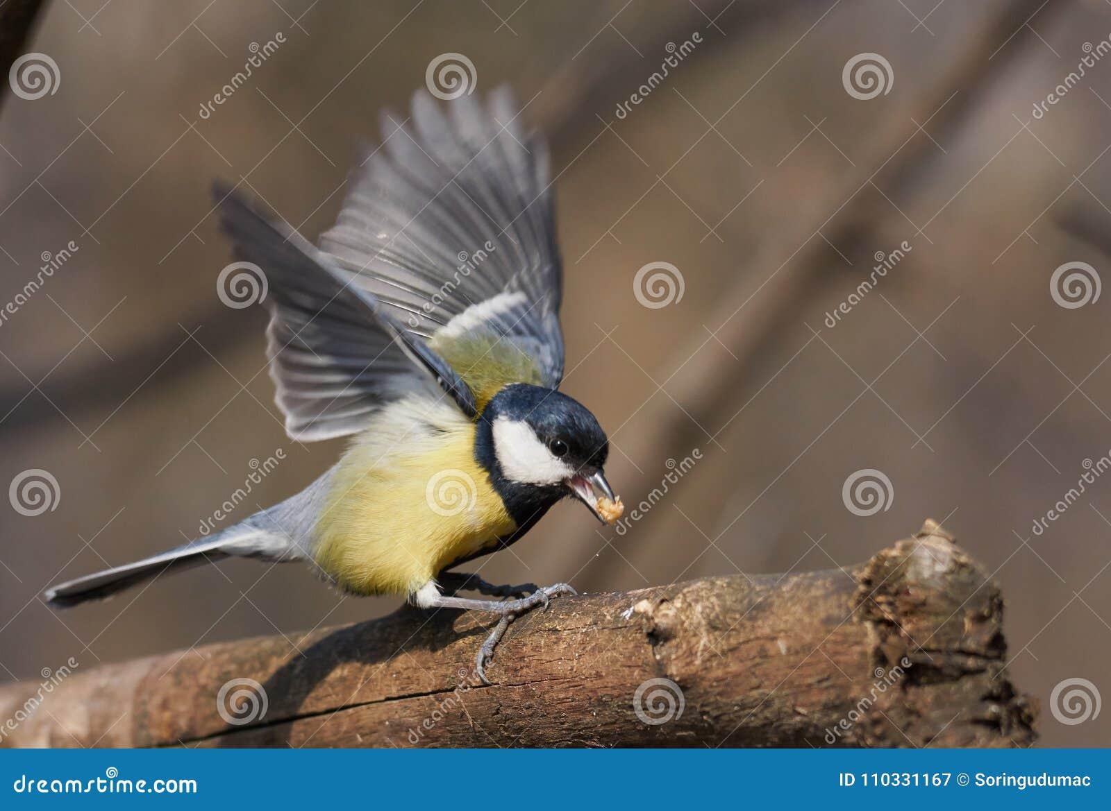 μεγάλο μαύρο πουλί συλλογή φωτογραφιών ώριμη λεσβία σαγηνεύει ντροπαλός νεαρό κορίτσι