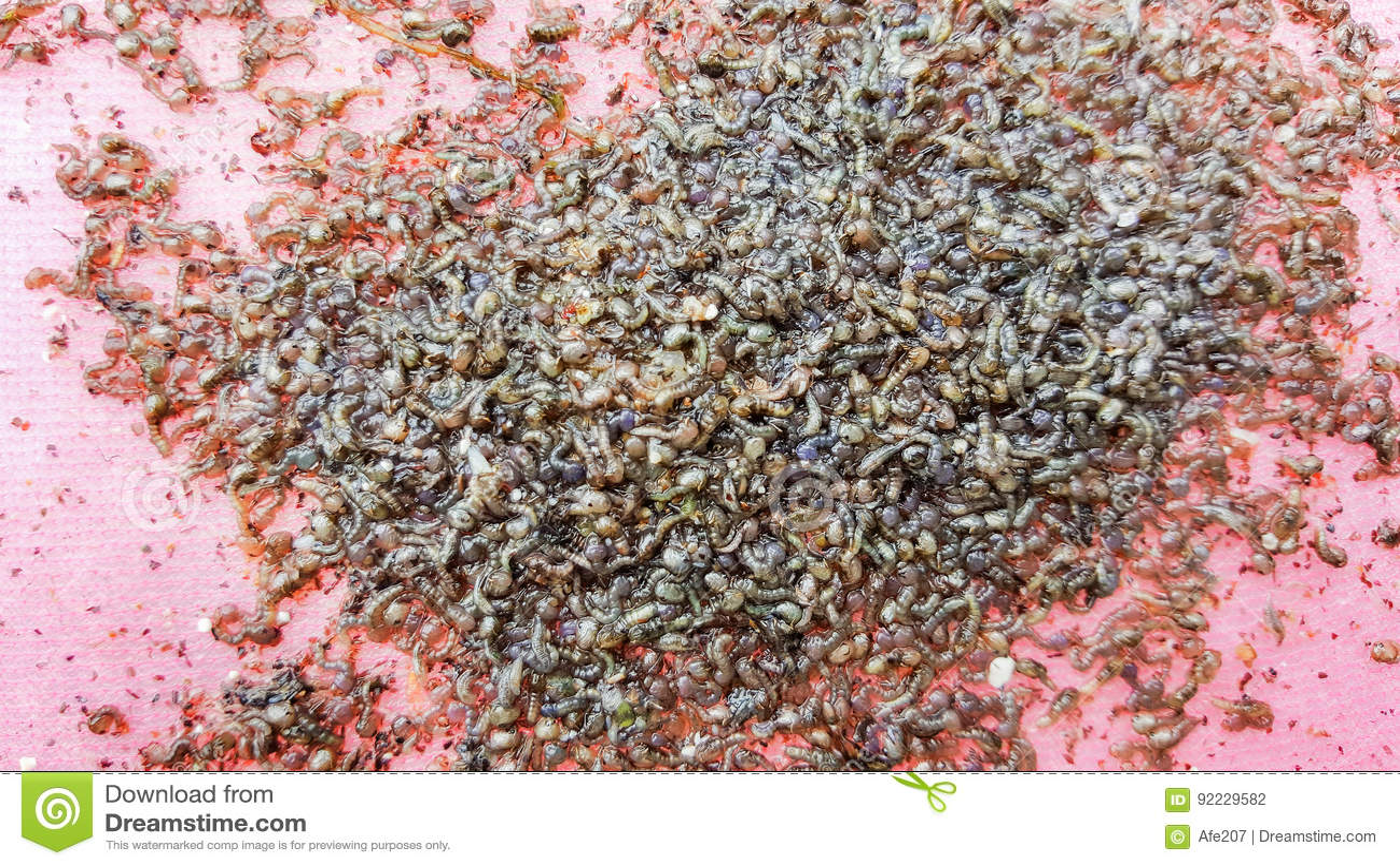 Προνύμφη κουνουπιών στα λύματα