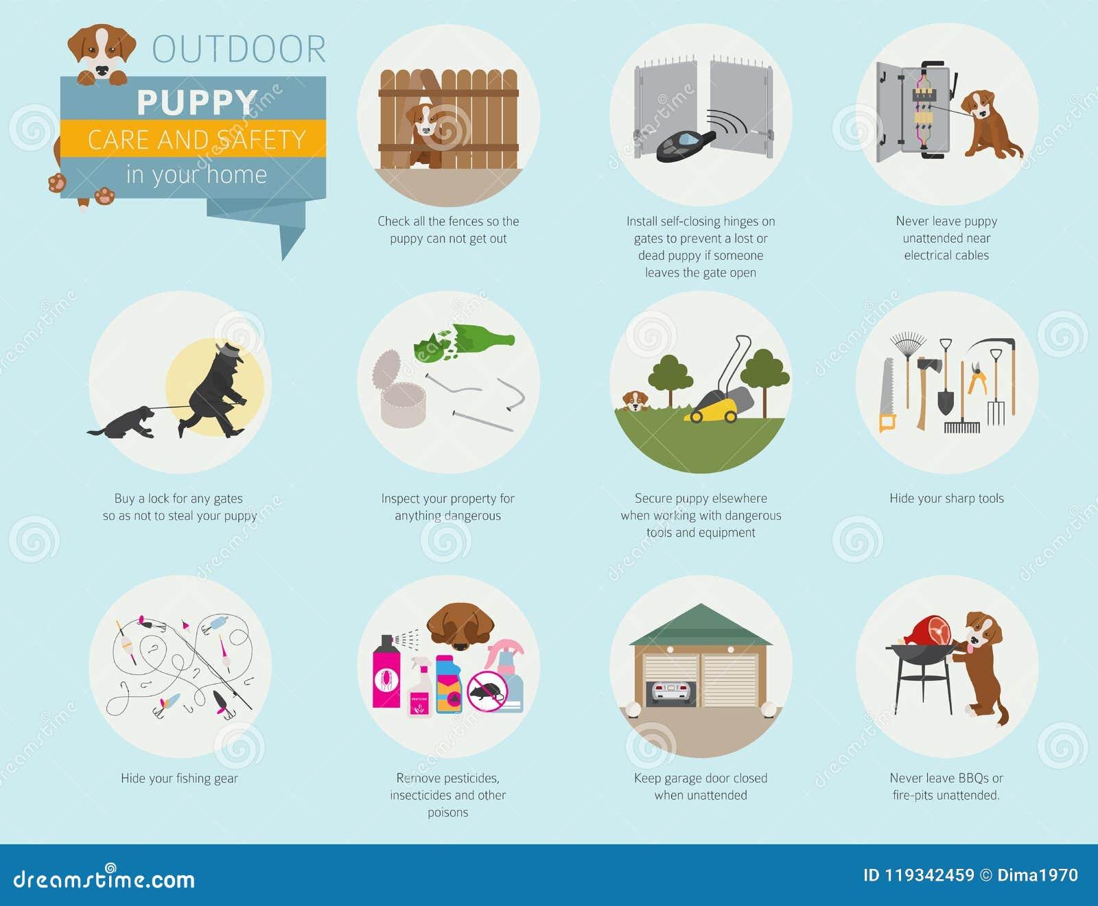 Προσοχή και ασφάλεια κουταβιών στο σπίτι σας υπαίθριος Σκυλί της Pet που εκπαιδεύει μέσα