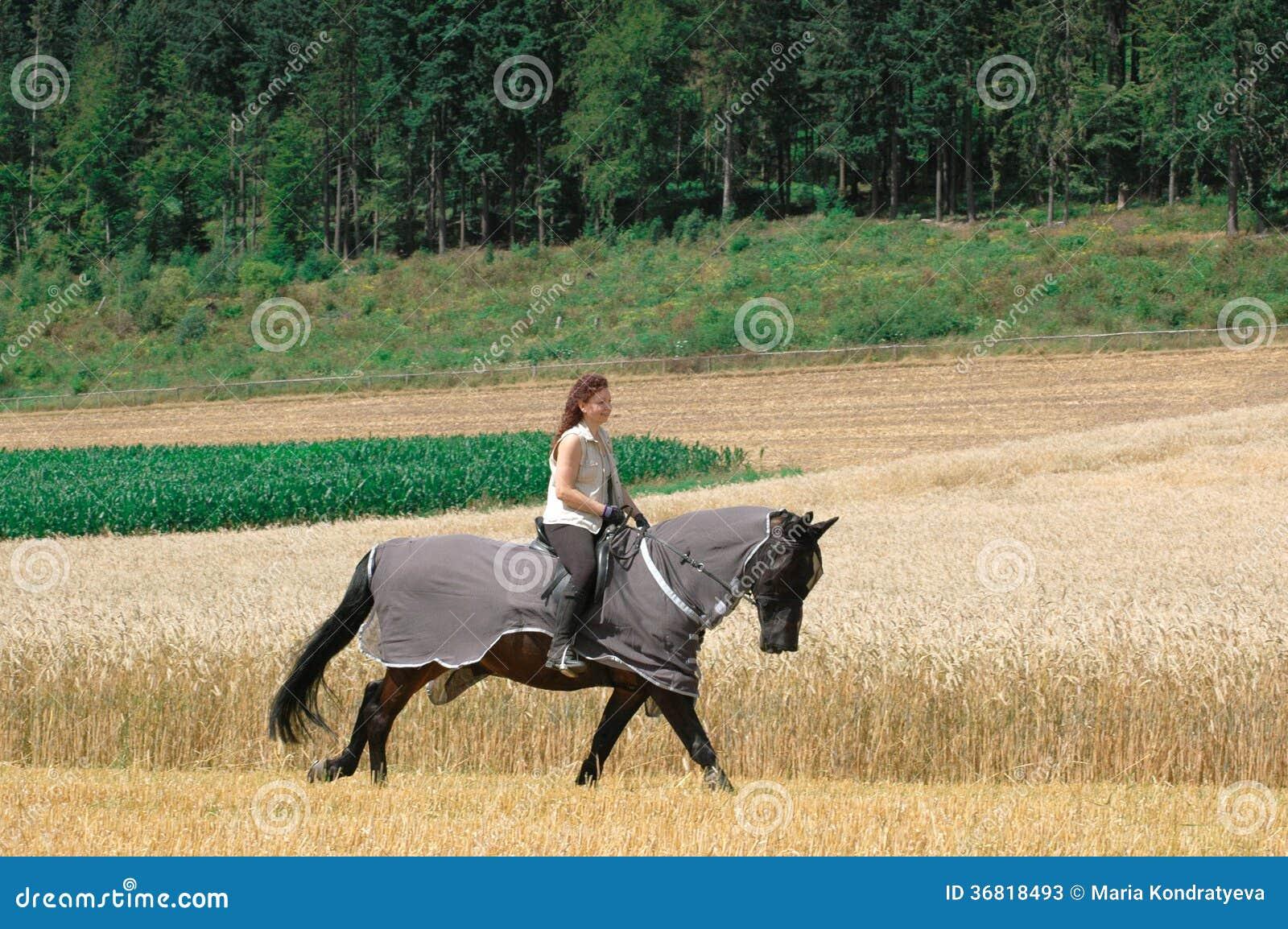 Προστασία ενάντια στα έντομα για τα άλογα.