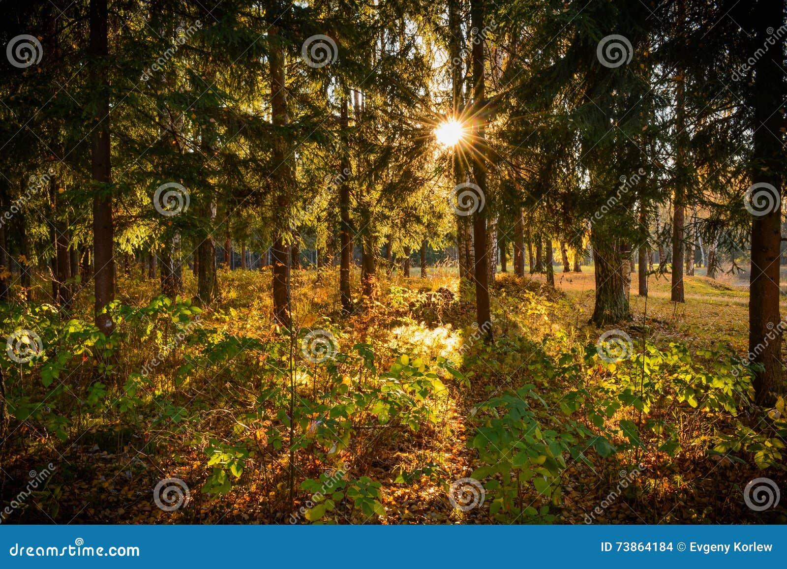 Πρωί στο δάσος