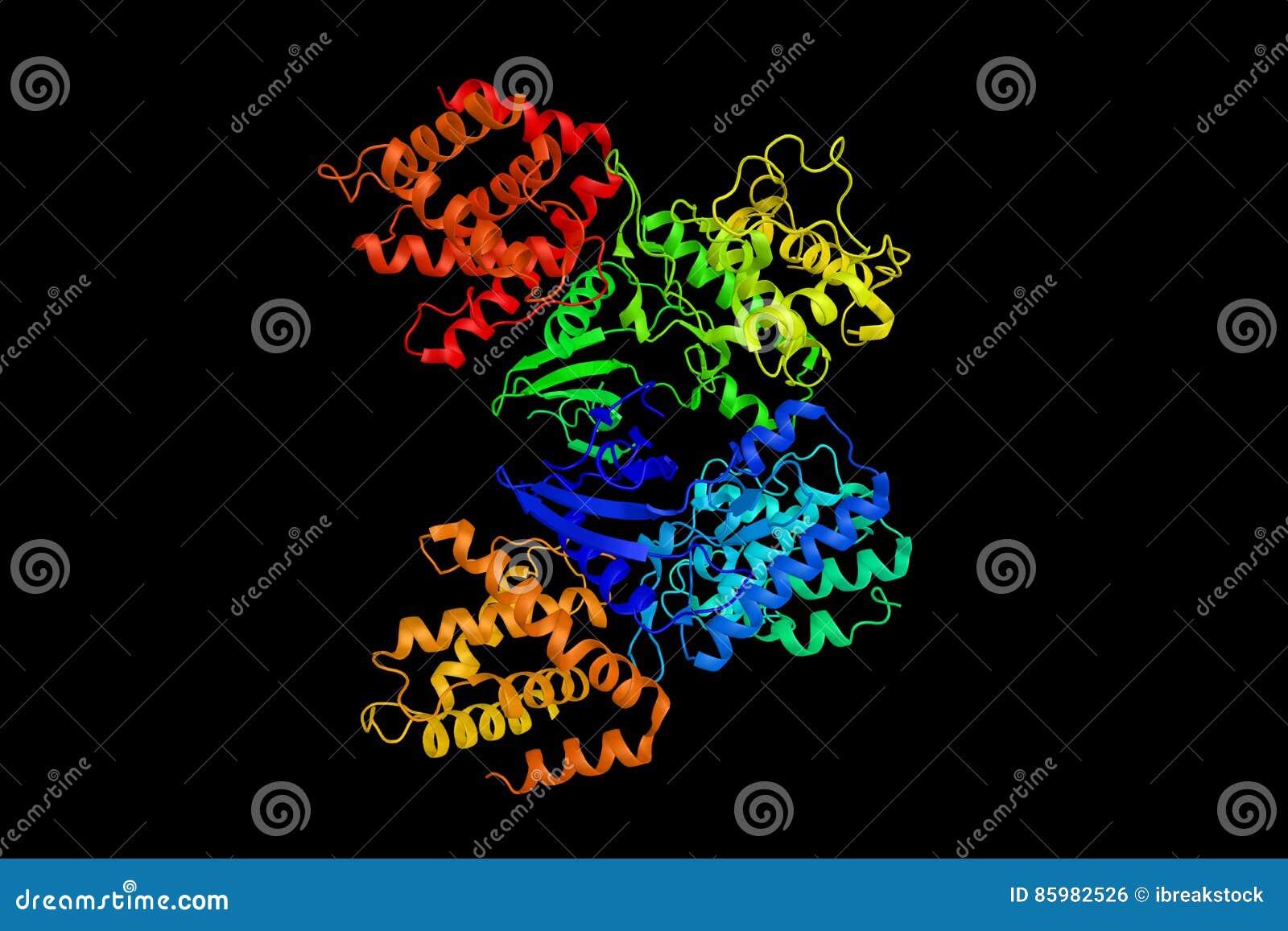 Πρωτεϊνική κινάση 5, ένα ένζυμο κυτταροδιαίρεσης που είναι ένα ουσιαστικό