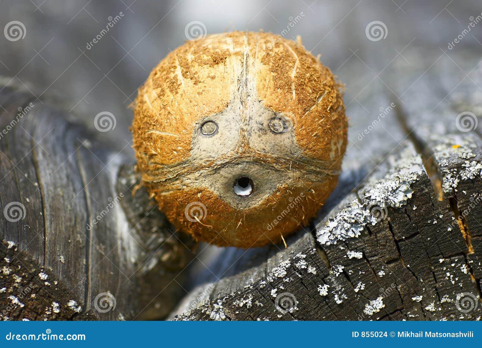 πρόσωπο καρύδων