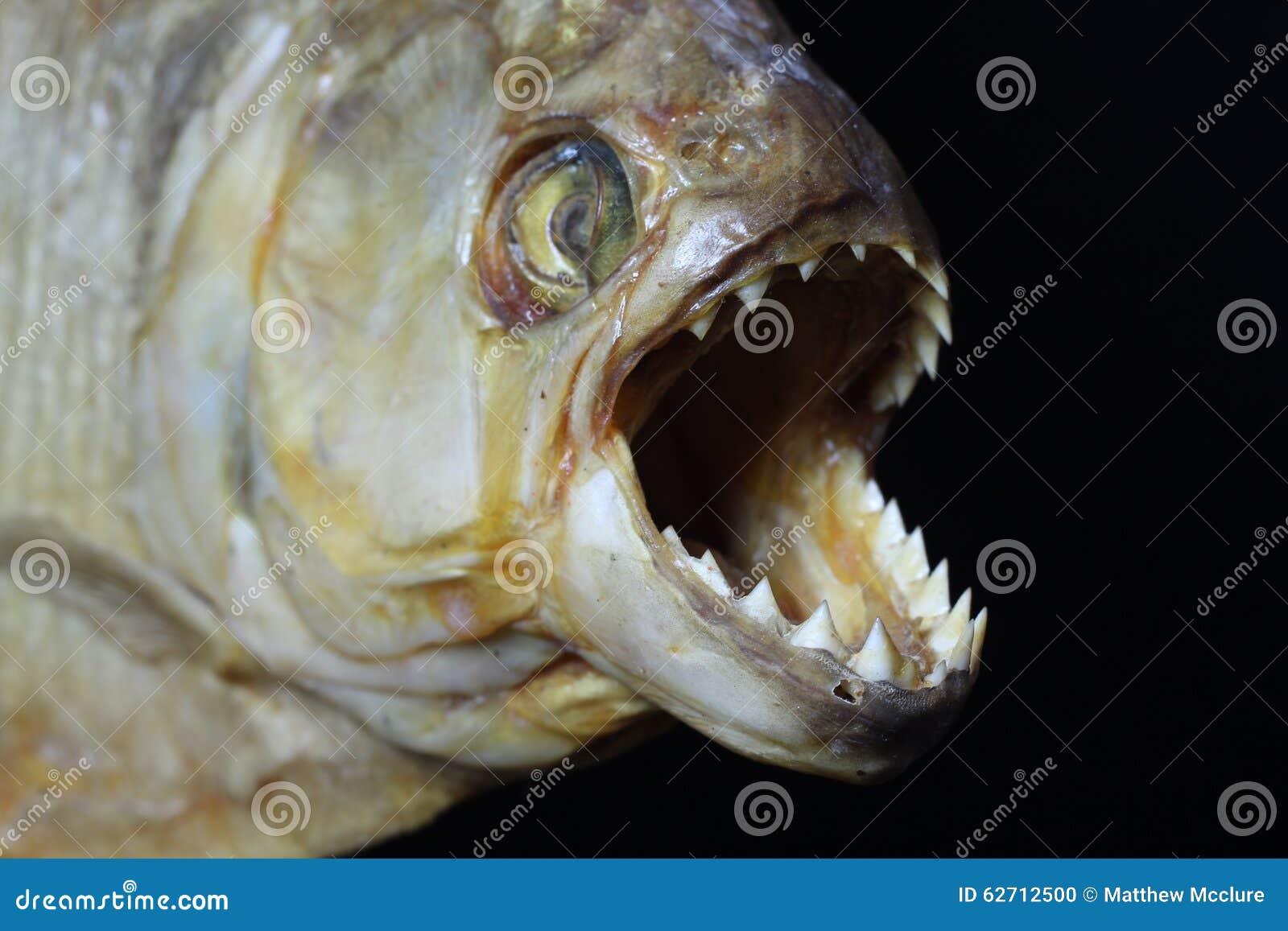 Πρόσωπο Piranha