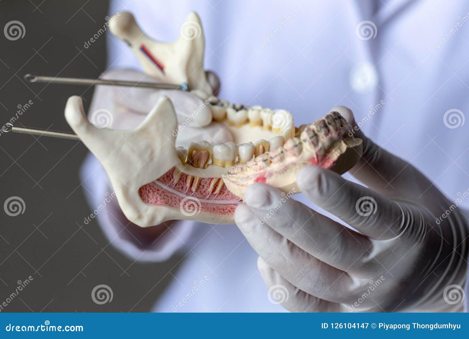 Πρότυπο δοντιών για την εκπαίδευση στο εργαστήριο