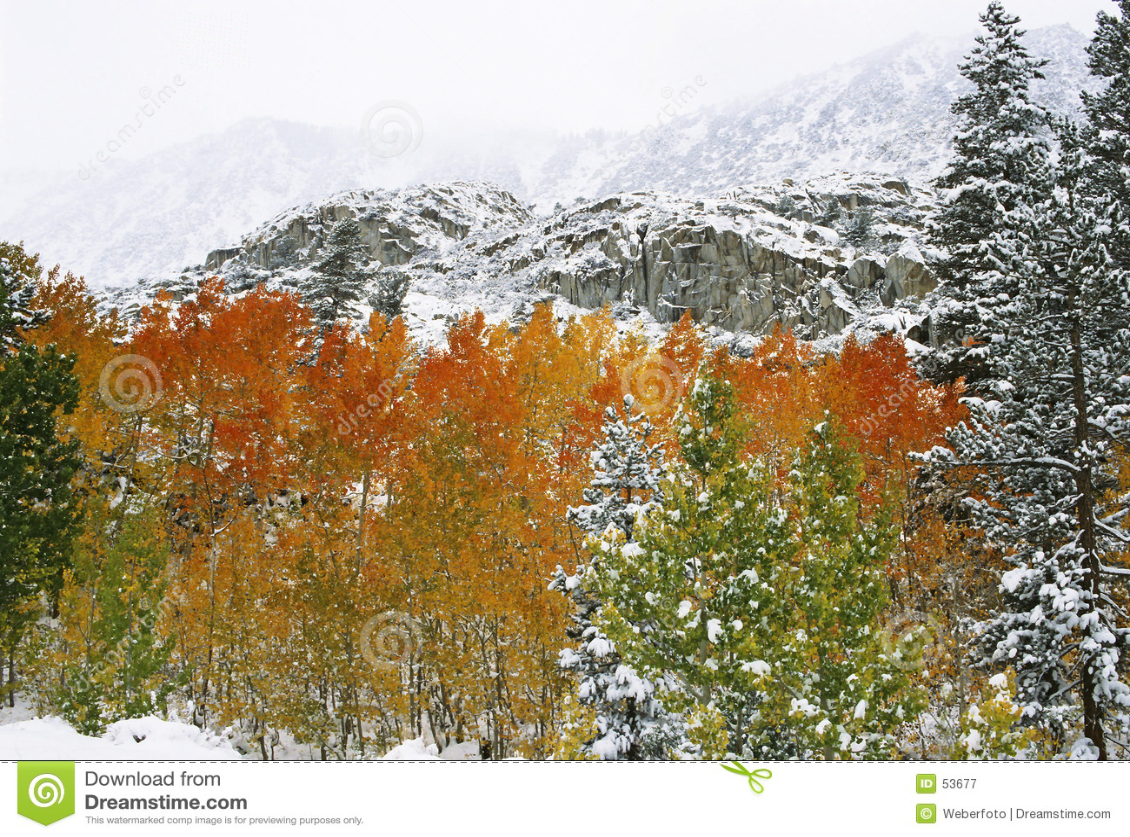 Download πρώτο χιόνι βουνών στοκ εικόνα. εικόνα από πράσινος, κάλυψη - 53677
