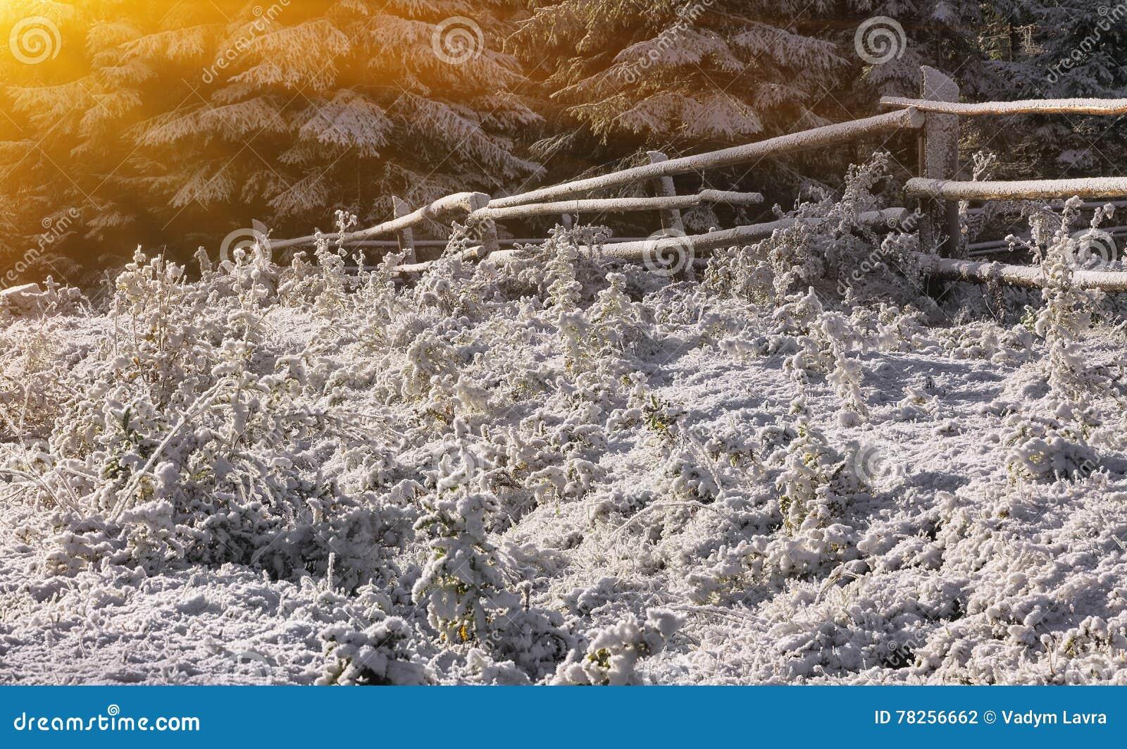 Πρώτο χιόνι στο λιβάδι βουνών