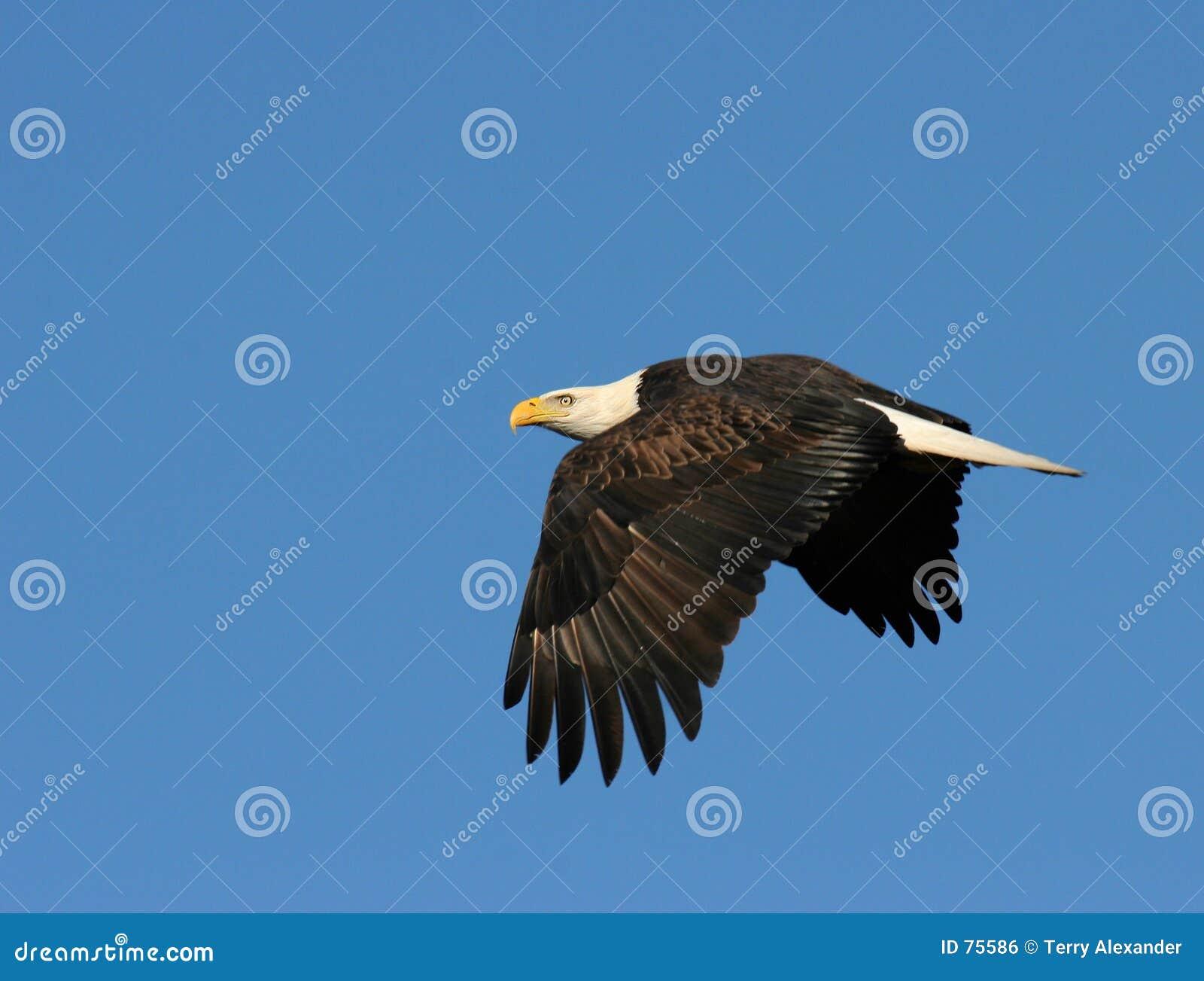 πτήση αετών