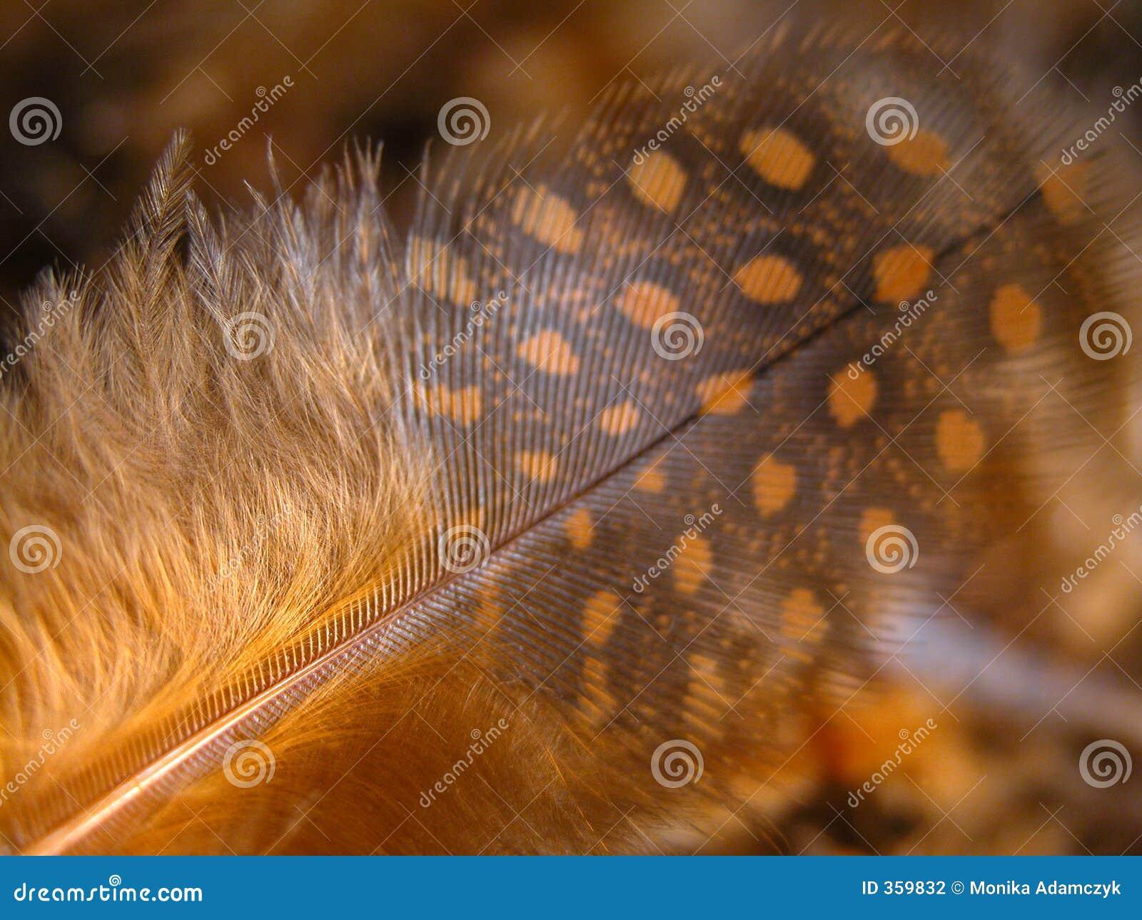 πτηνά Γουινέα φτερών