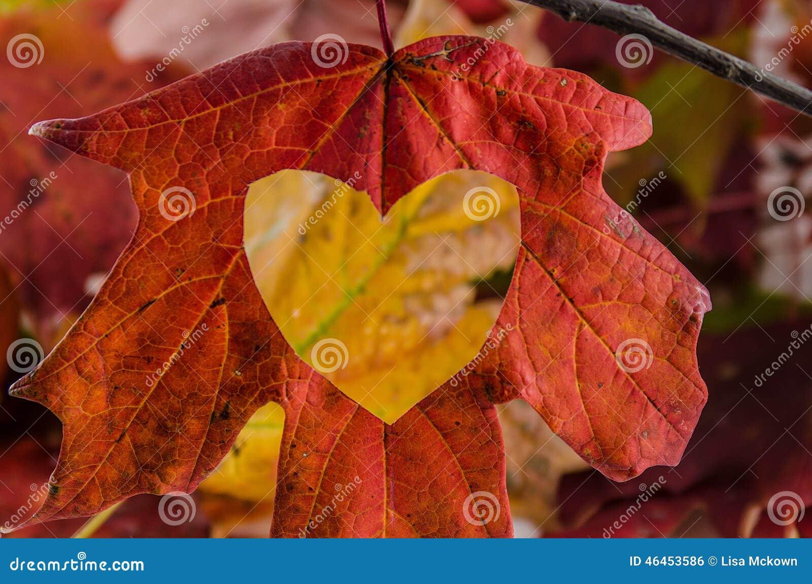 Πτώση αγάπης με μια καρδιά που κόβεται στο φύλλο