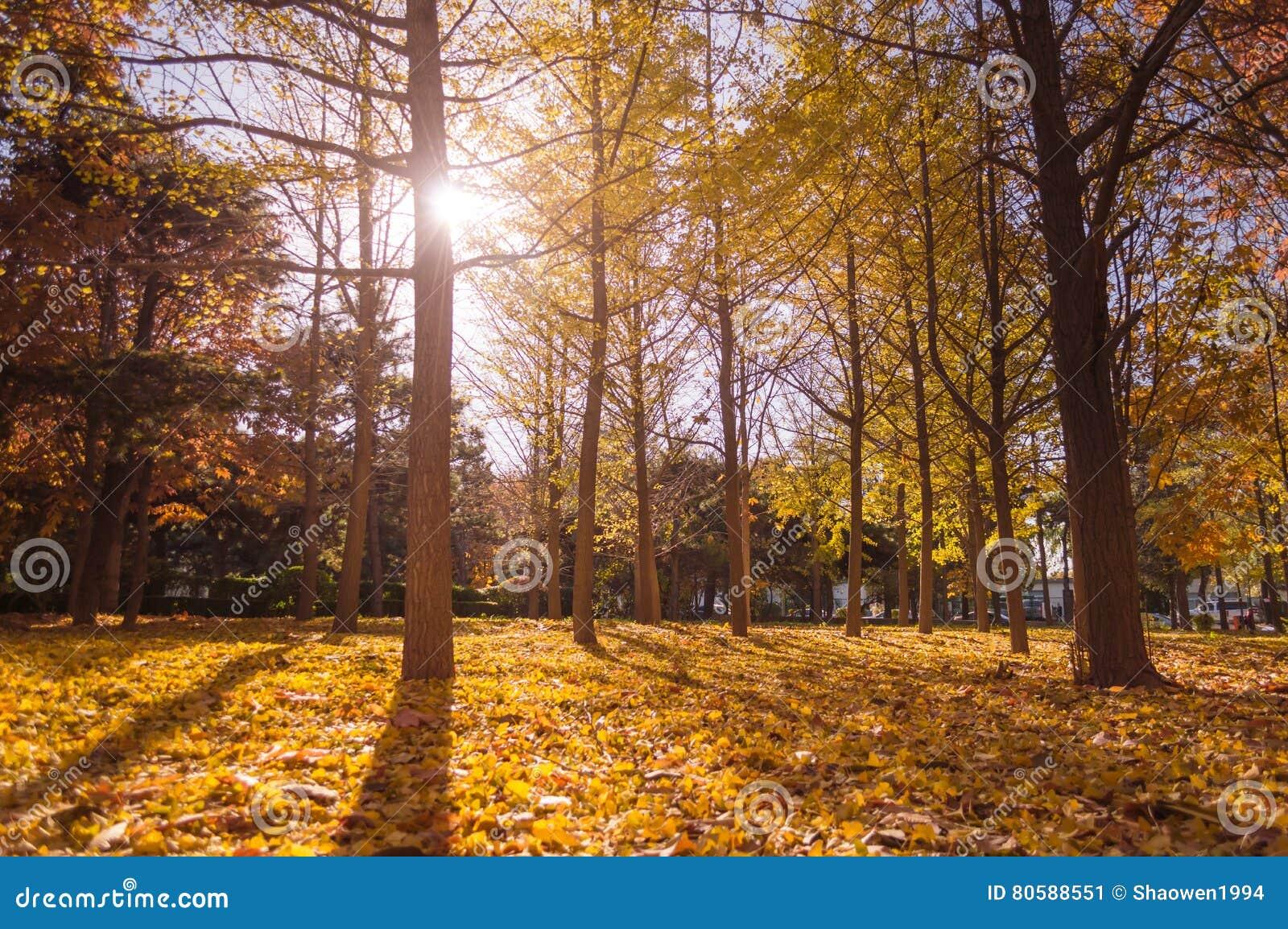 πτώση ζωηρόχρωμο δασικό τοπίο φύλλων φθινοπώρου