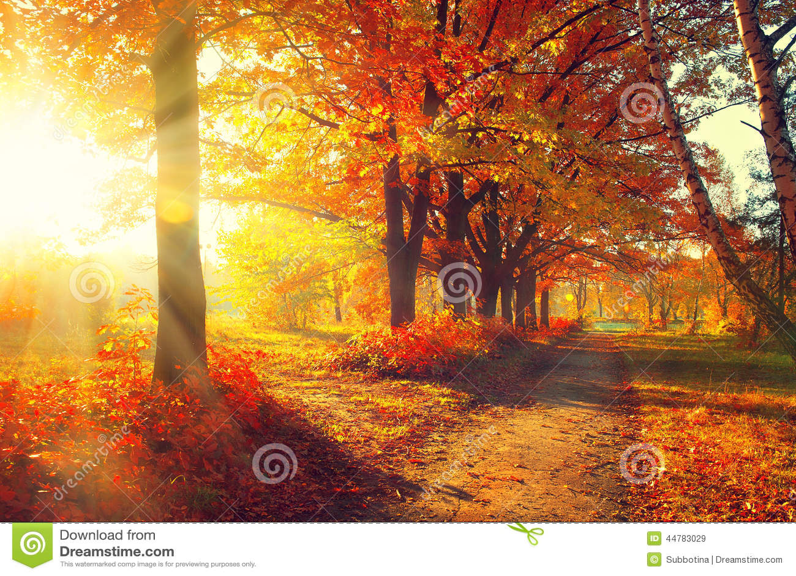 πτώση Πάρκο φθινοπώρου
