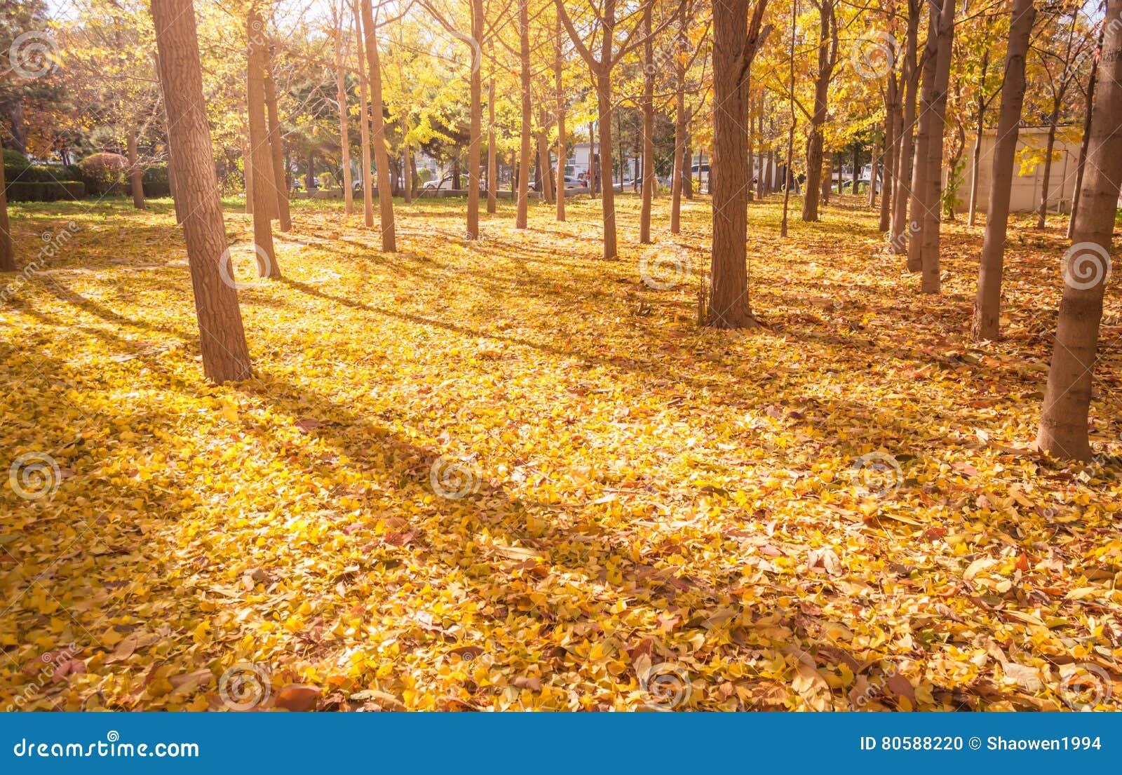 πτώση Τοπίο φθινοπώρου