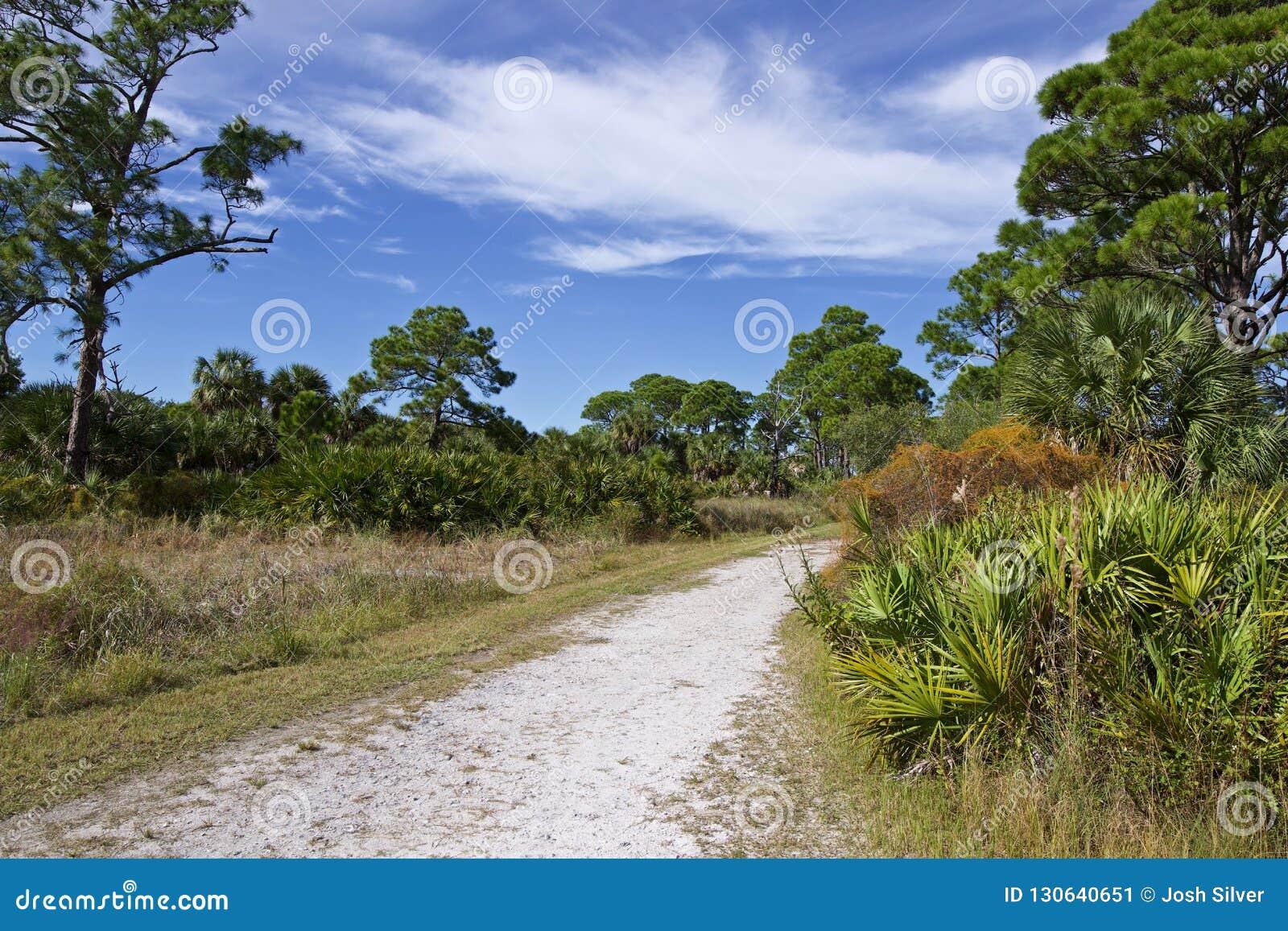 Πυκνά ξύλα κατά μήκος μιας αμμώδους πορείας