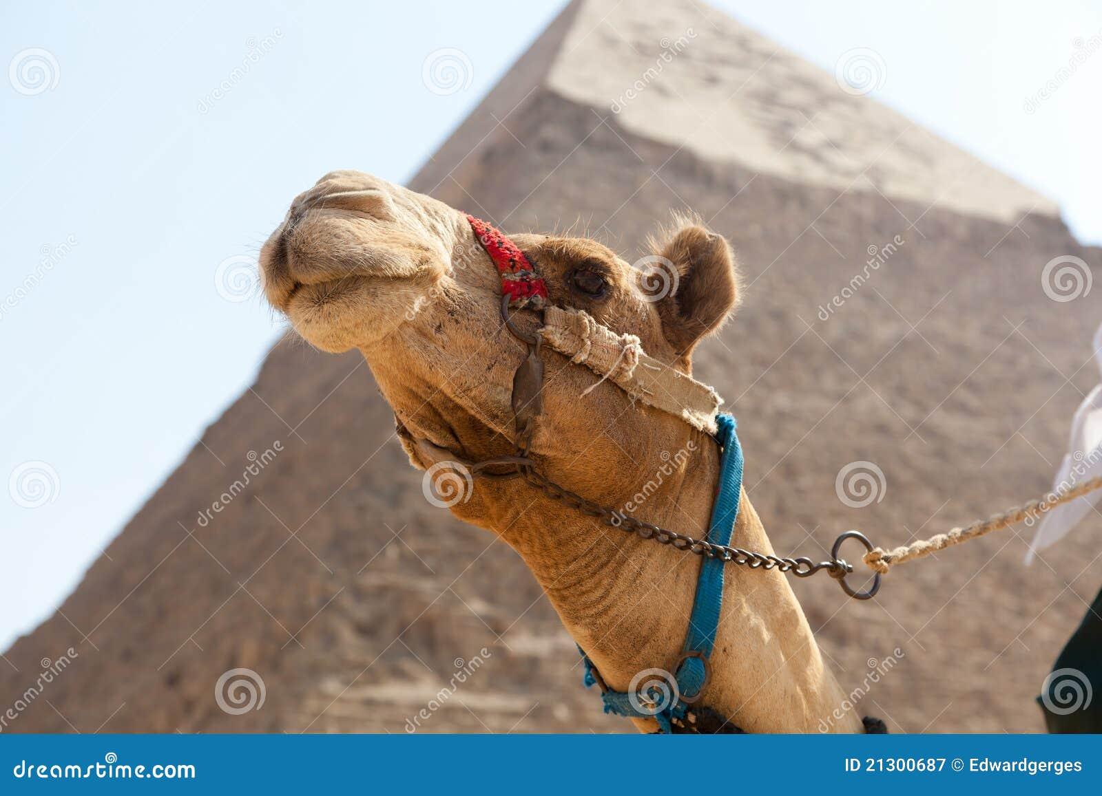 πυραμίδα giza της Αιγύπτου κ&alph