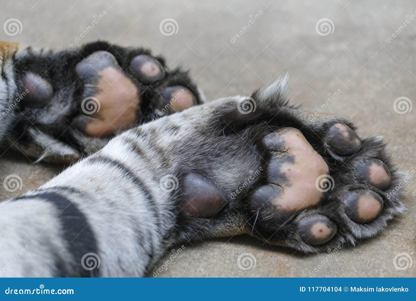 Πόδια τιγρών