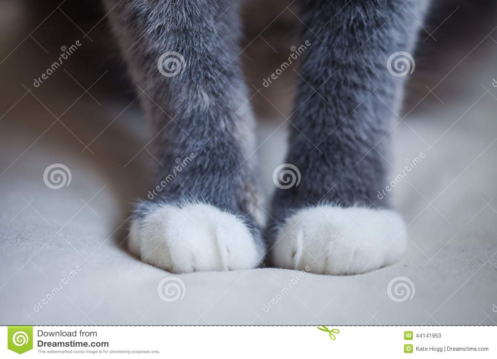 πόδια s γατών