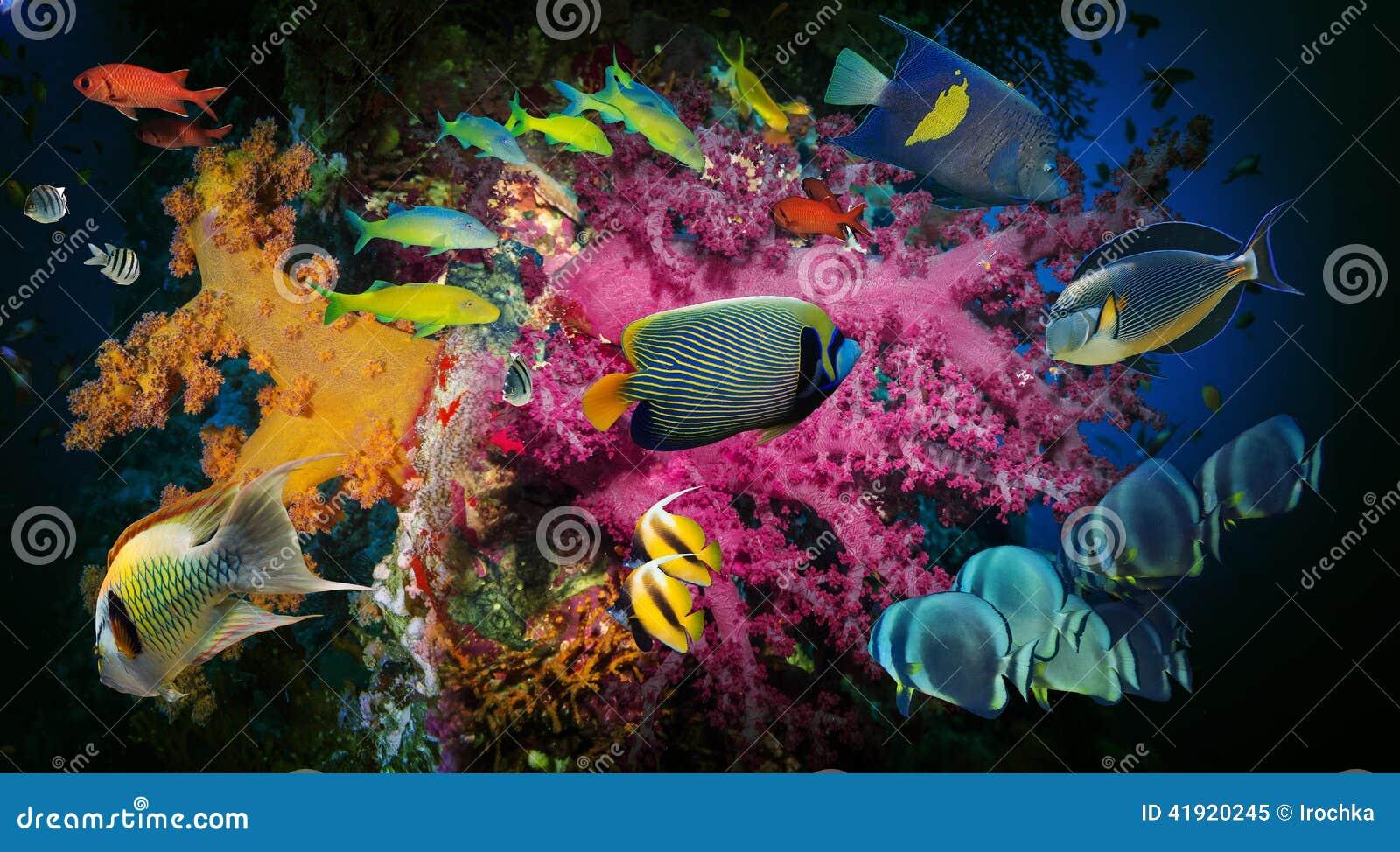πλάνο Ερυθρών Θαλασσών ψαριών κοραλλιών