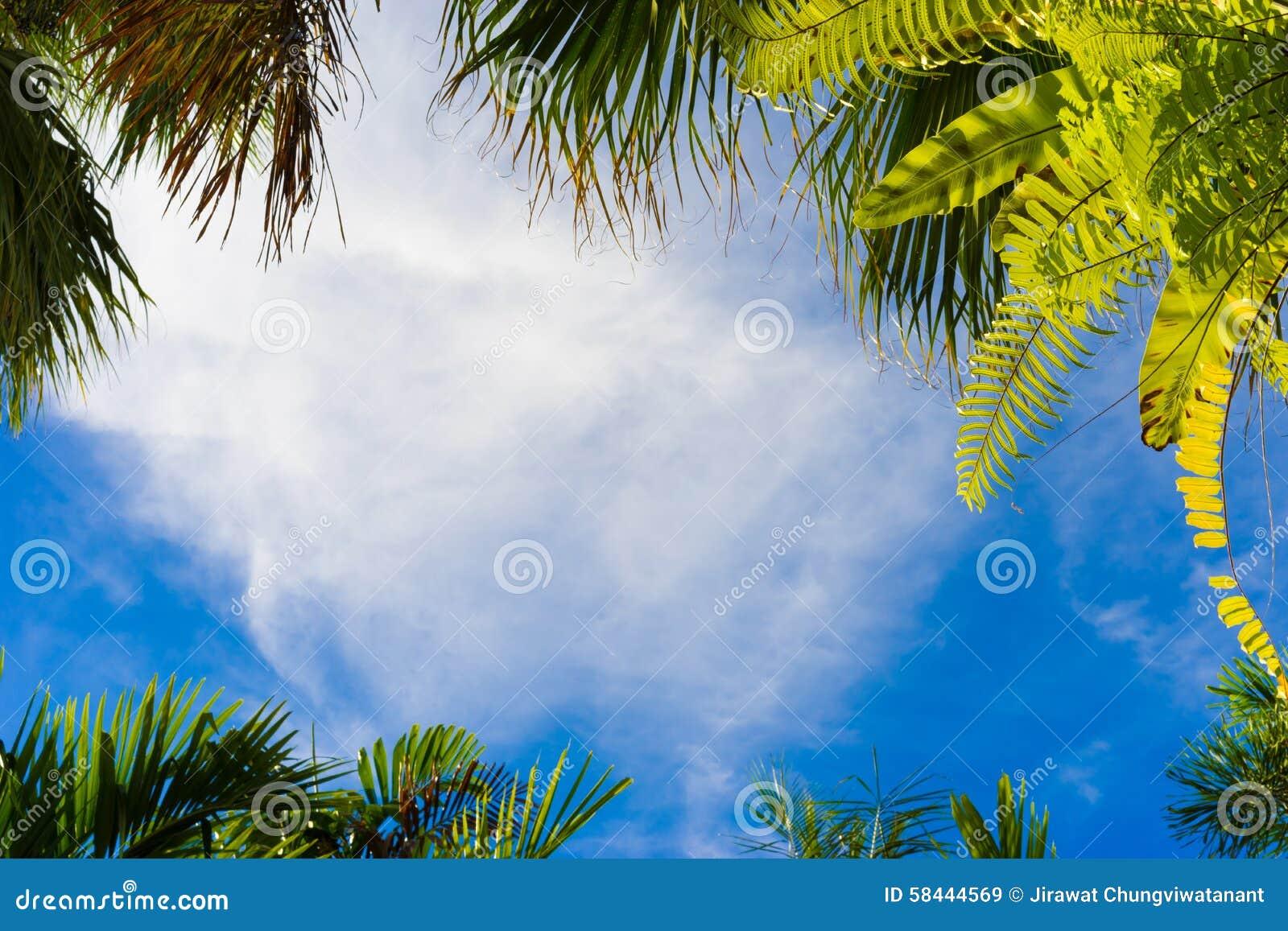Πλαίσιο δέντρων καρύδων