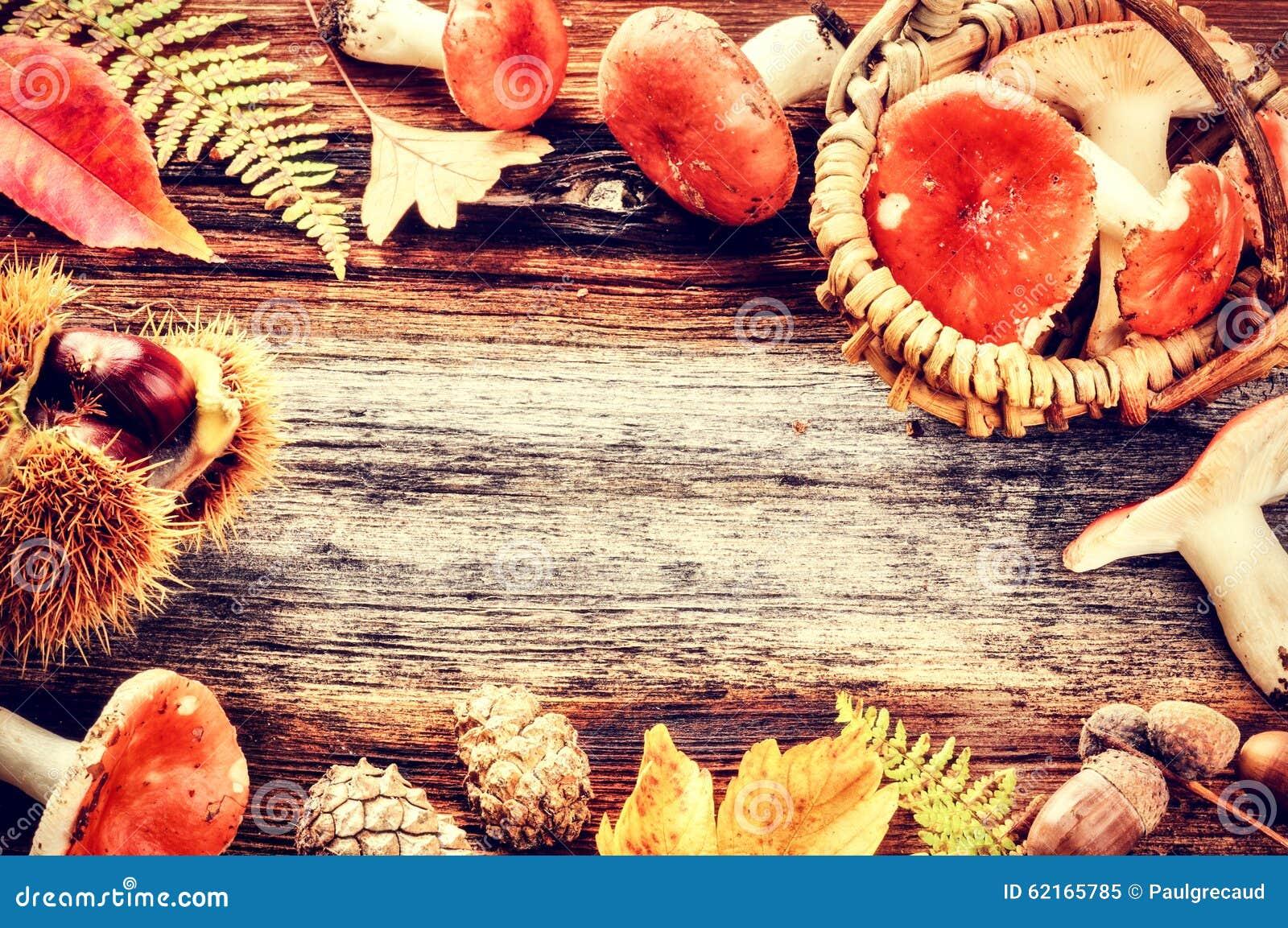 Πλαίσιο φθινοπώρου με τα δασικά μανιτάρια
