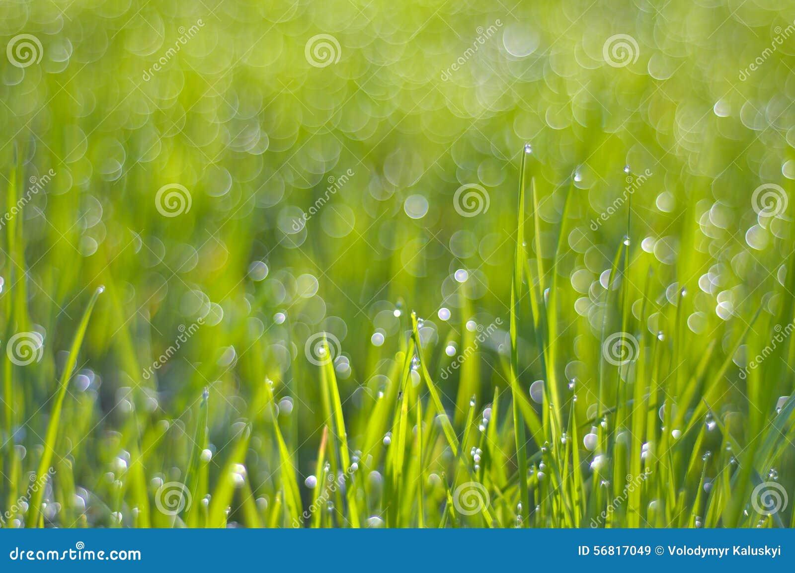 Πλούσια πράσινη χλόη στα σταγονίδια της δροσιάς στο φως ήλιων πρωινού
