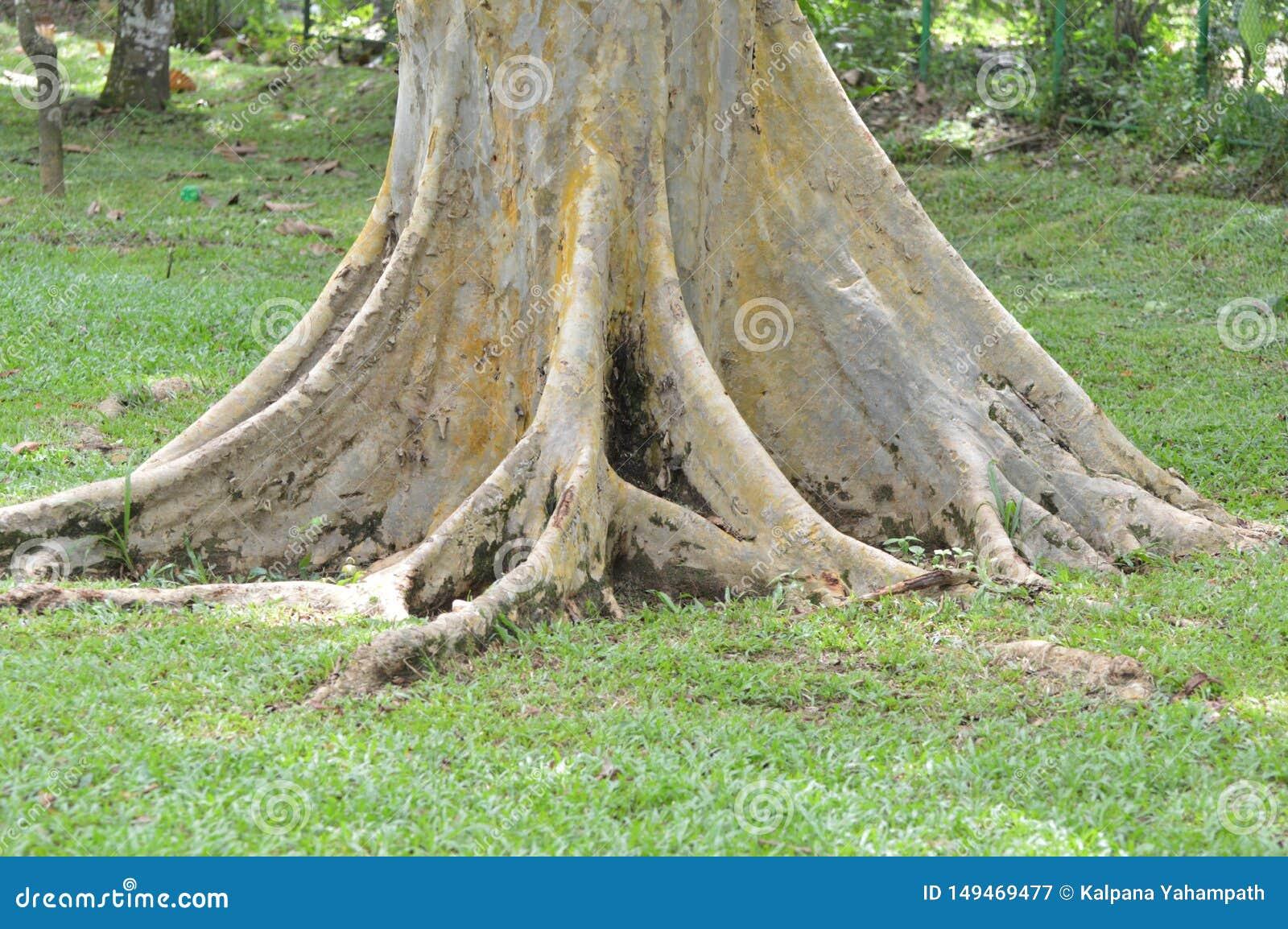 Ρίζες του δέντρου