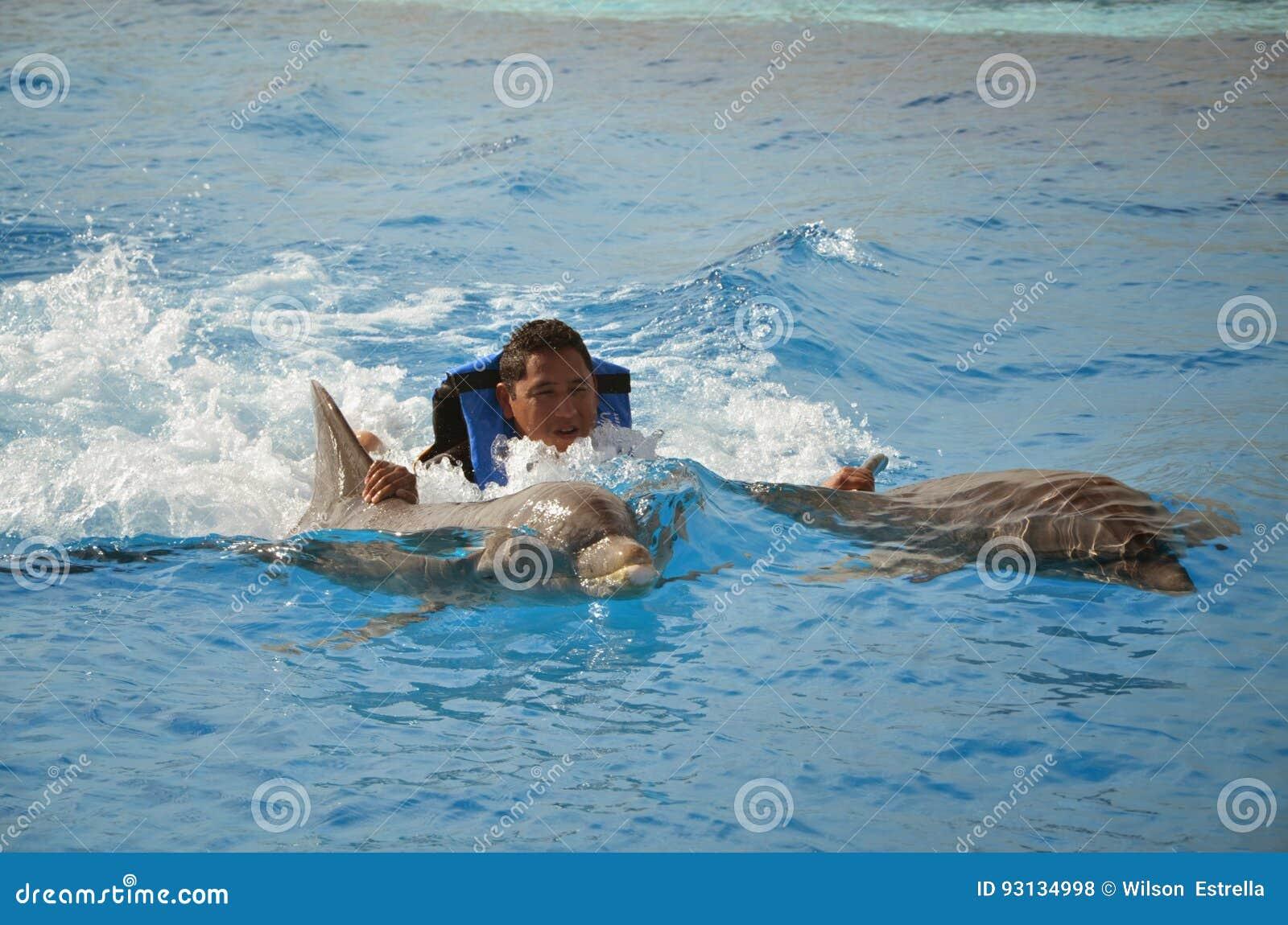 Ραχιαίος γύρος - δελφίνια