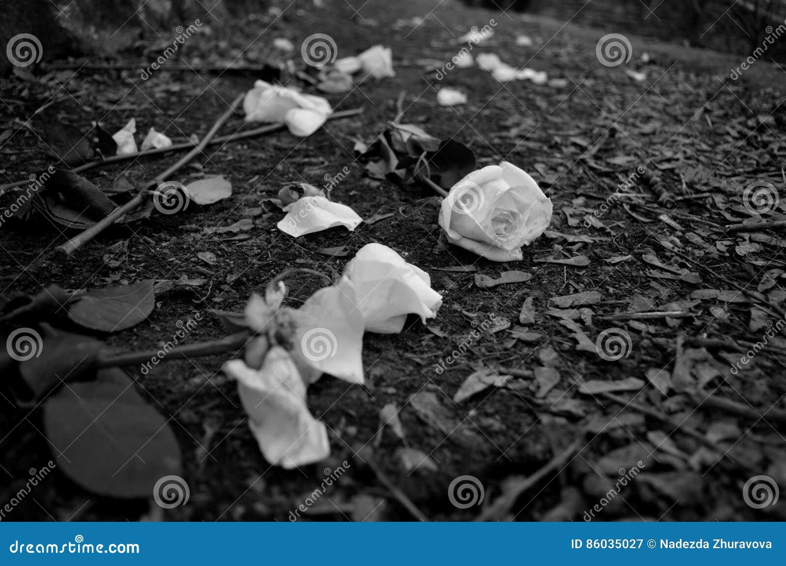 Ριγμένα έξω τριαντάφυλλα