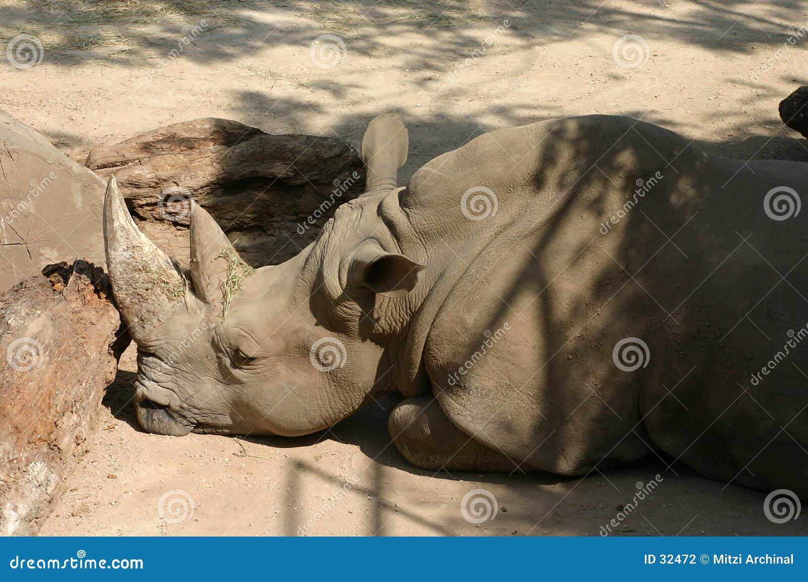 ρινόκερος σχεδιαγράμματ&