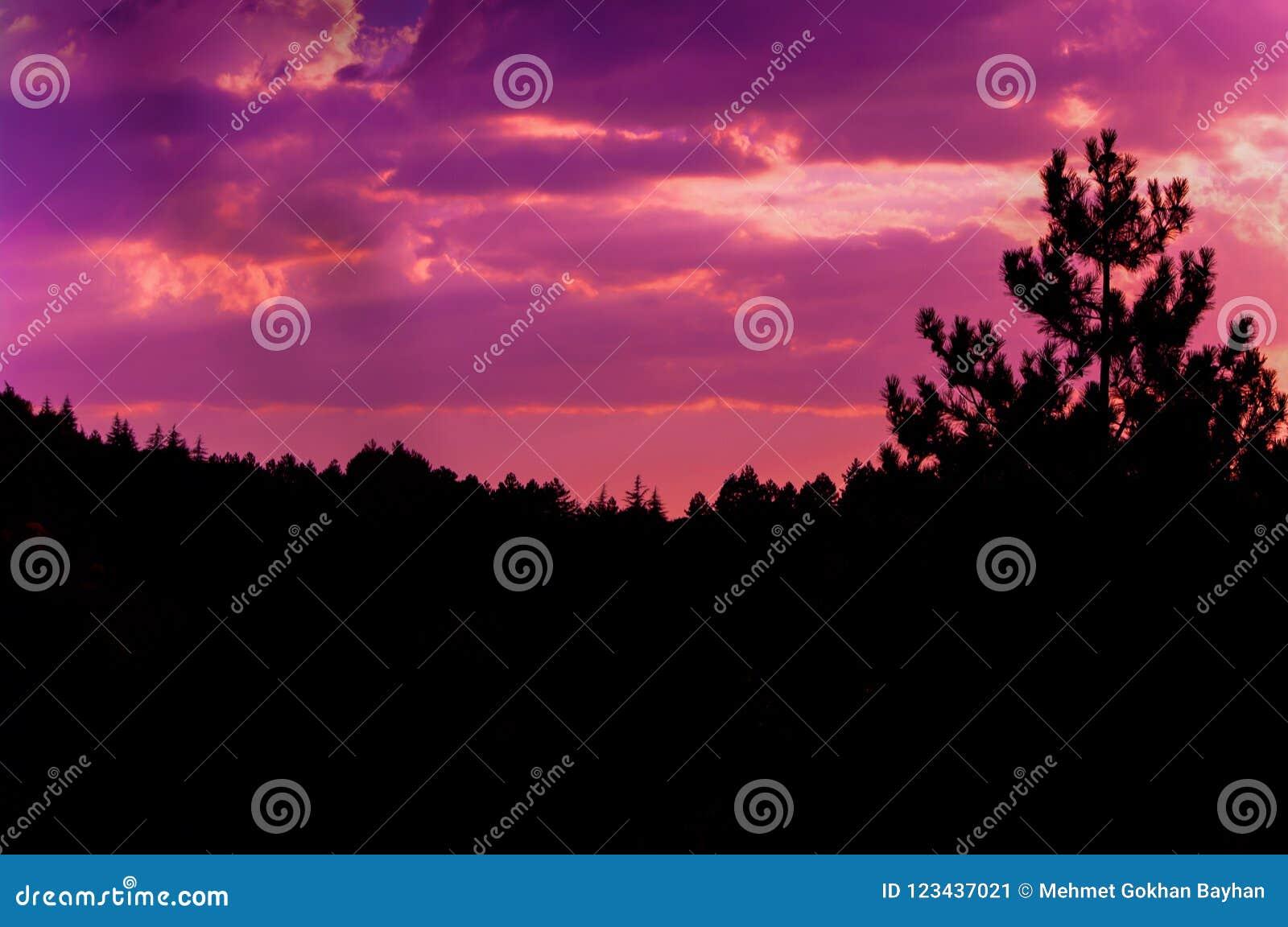 Ροζ ουρανός ηλιοβασιλέματος και φωτογραφία σύννεφων στο δάσος πεύκων