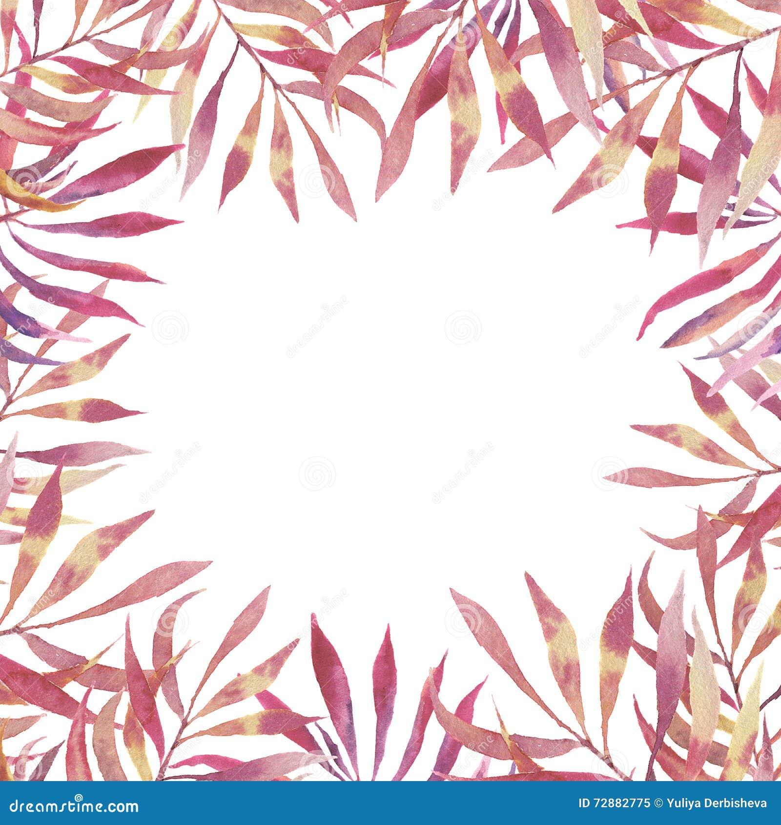 Ροζ floral κάρτα πλαισίων Watercolor Χρωματισμένα χέρι σύνορα με το πίτουρο