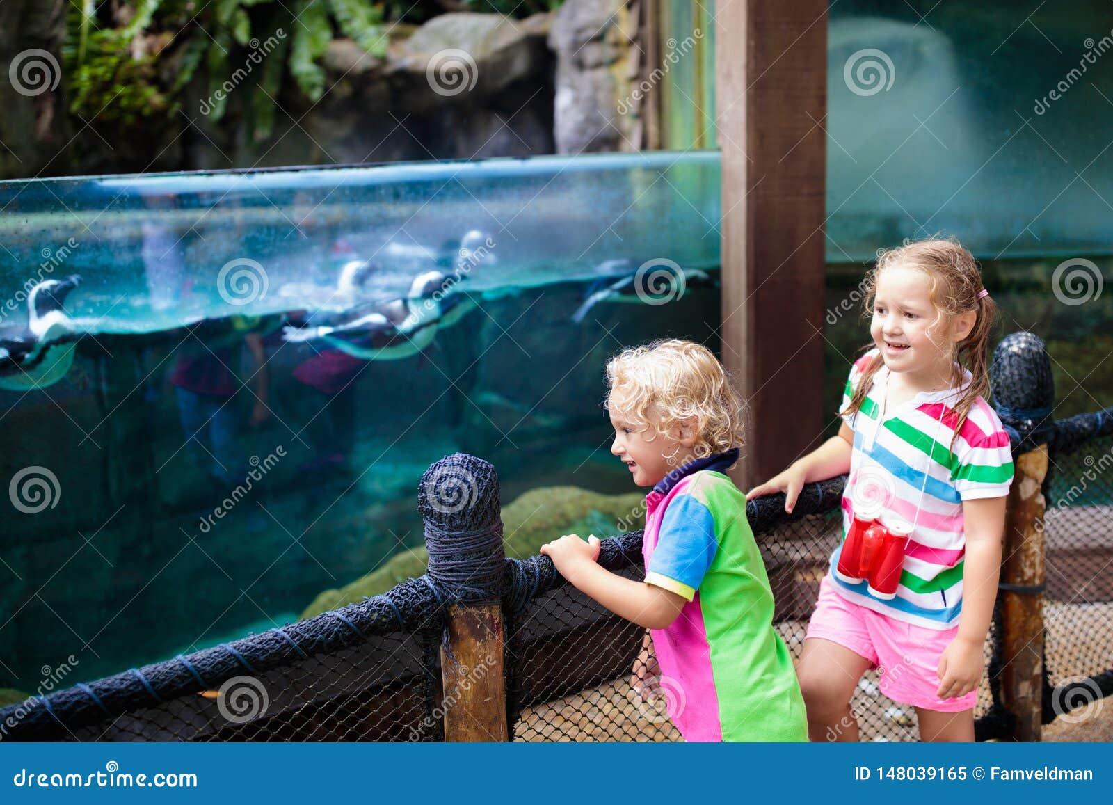Ρολόι παιδιών penguin στο ζωολογικό κήπο Παιδί στο πάρκο σαφάρι
