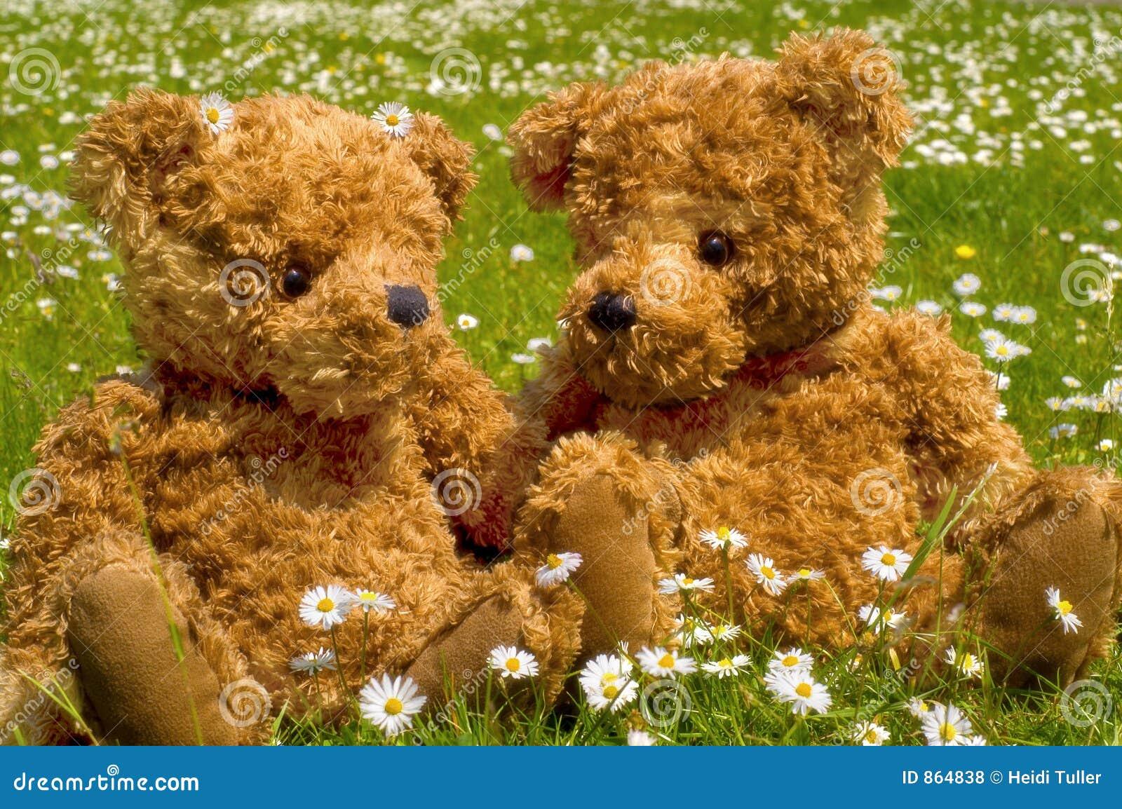 ρομαντικός teddybear ζευγών