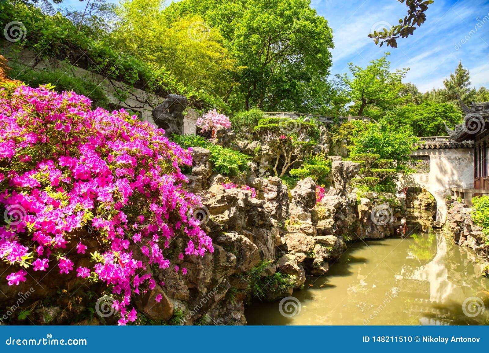 Ρόδινα λουλούδια και λεπτομέρειες του ιστορικού κήπου Yuyuan κατά τη διάρκεια της θερινής ηλιόλουστης ημέρας στη Σαγκάη, Κίνα