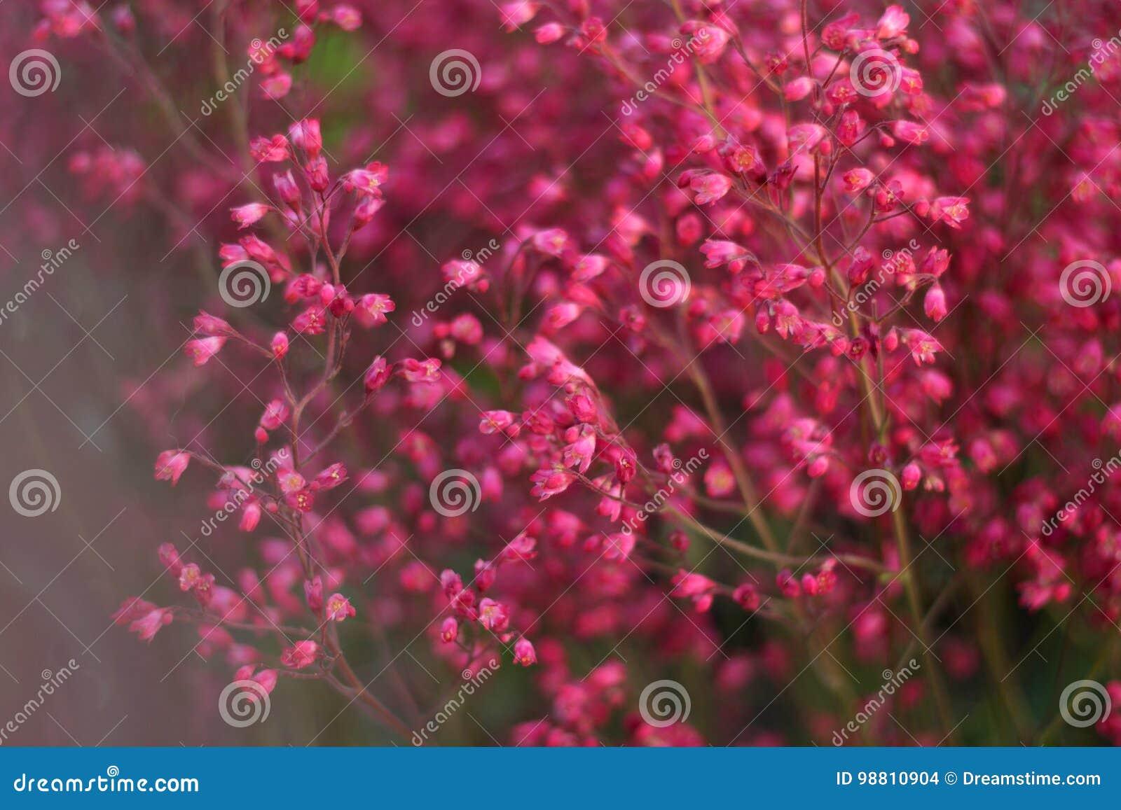 Ρόδινα λουλούδια