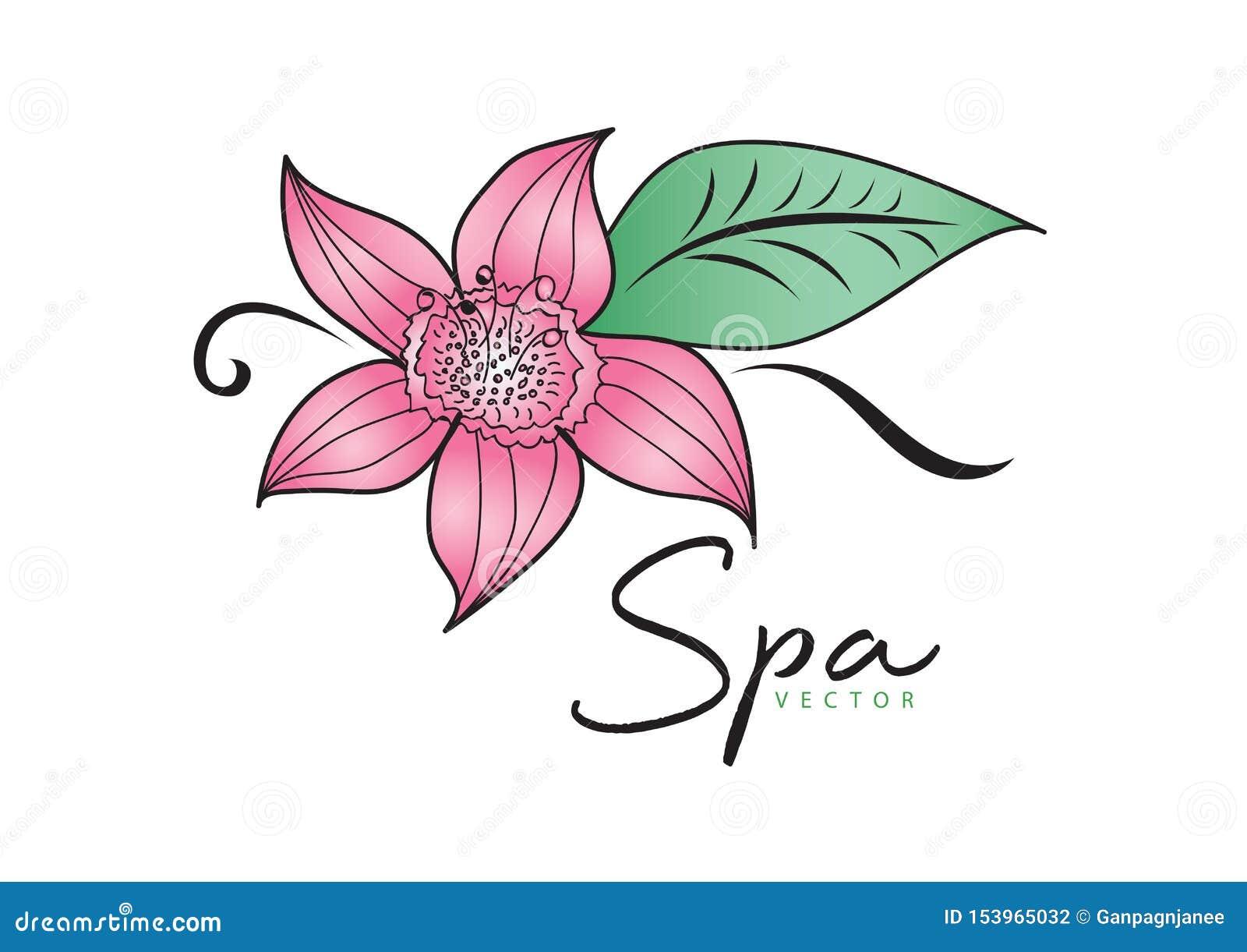 Ρόδινη διανυσματική απεικόνιση λουλουδιών σχέδιο λογότυπων πράσινο εικονίδιο φύλλων, στοιχείο για την ομορφιά και SPA